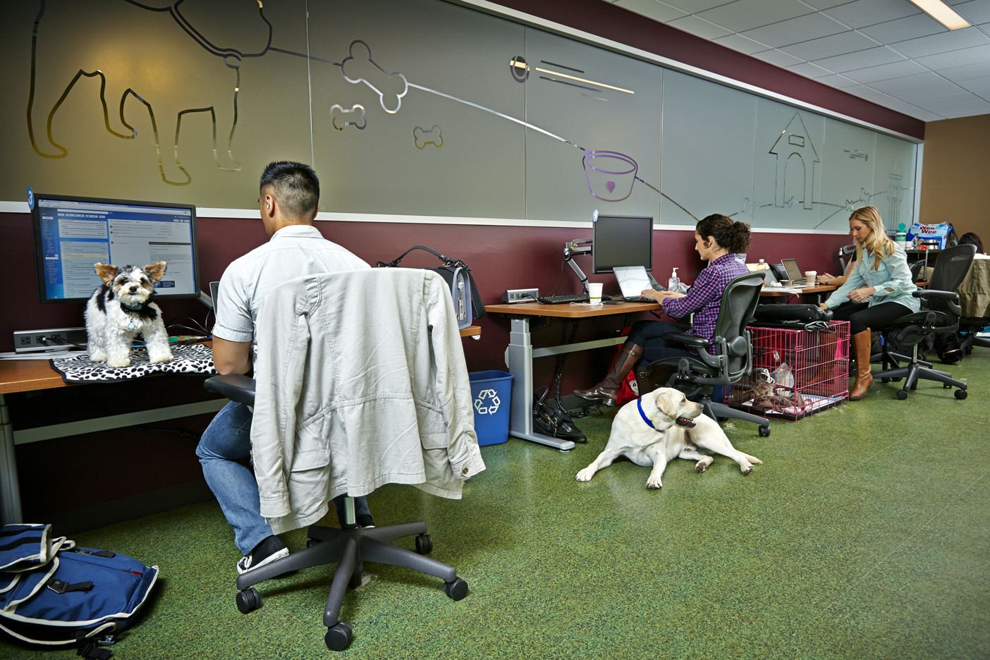 great workplaces salesforce puppy force