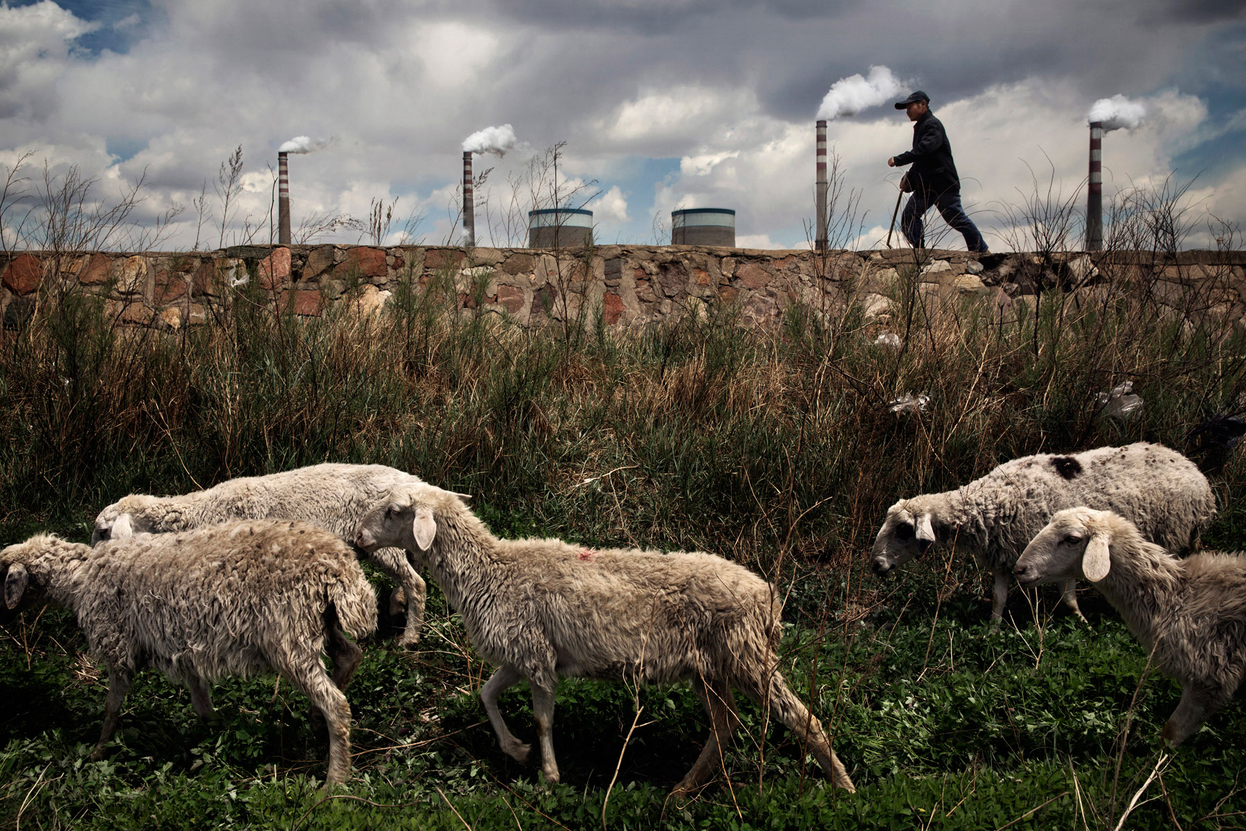 A shepherd drives his sheep