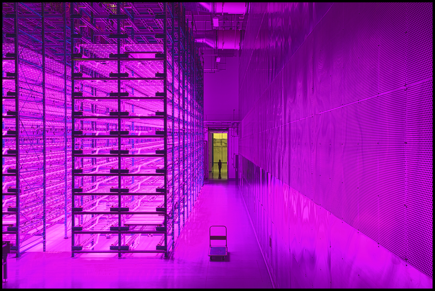 At its Bryan, Texas, facility, Caliber Biotherapeutics grows more than a million plants at a time, stacked 14 layers high, using specialized infrared lights and hydroponic growing techniques.