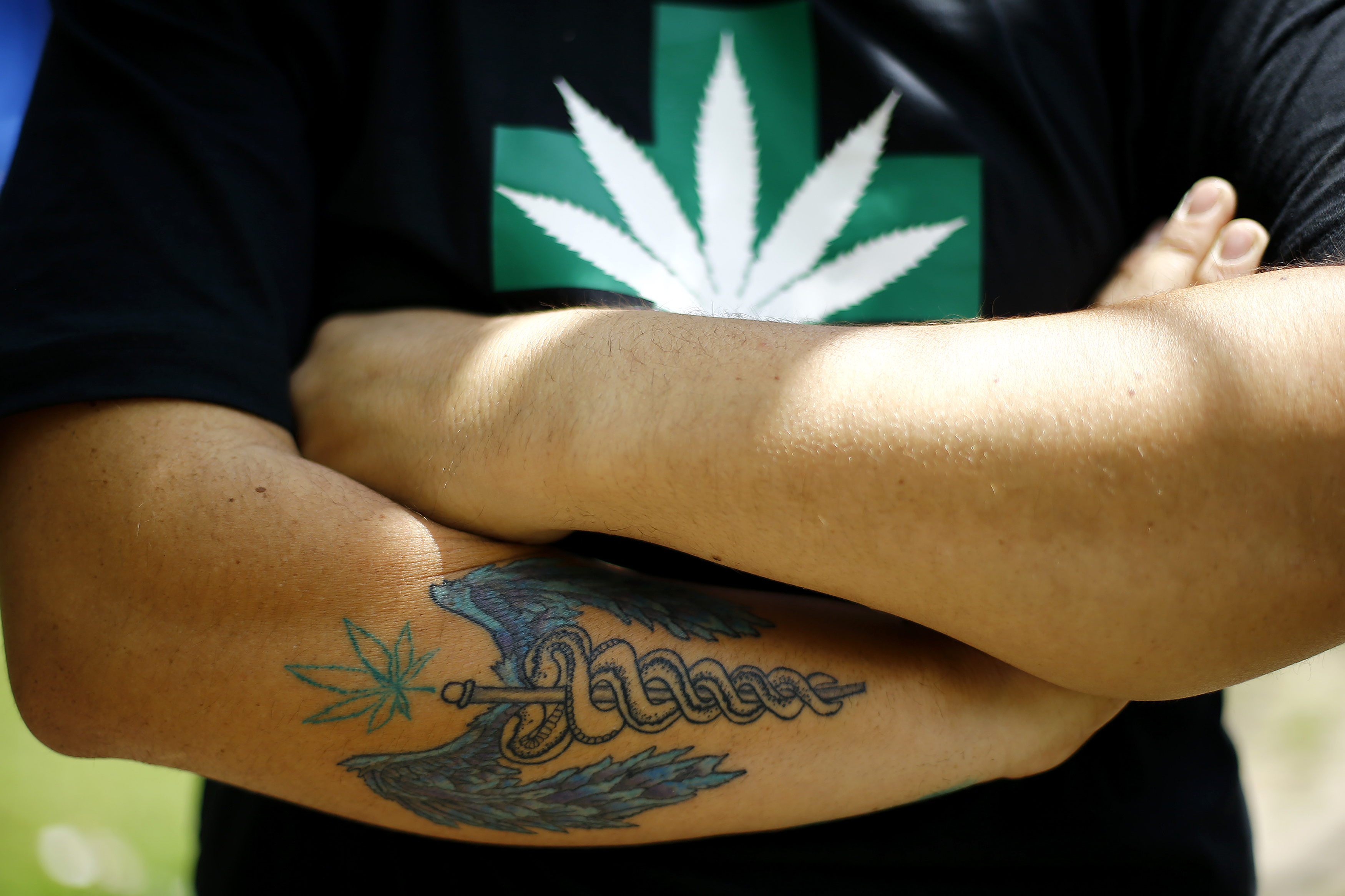 A man attends the first cultivation of cannabis authorized for medicinal purposes in Santiago