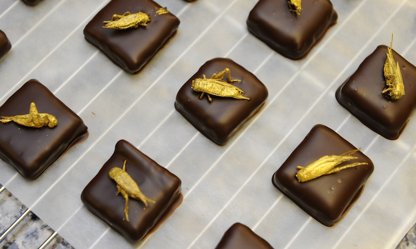 FRANCE-FOOD-CHOCOLATE-INSECT-OFFBEAT