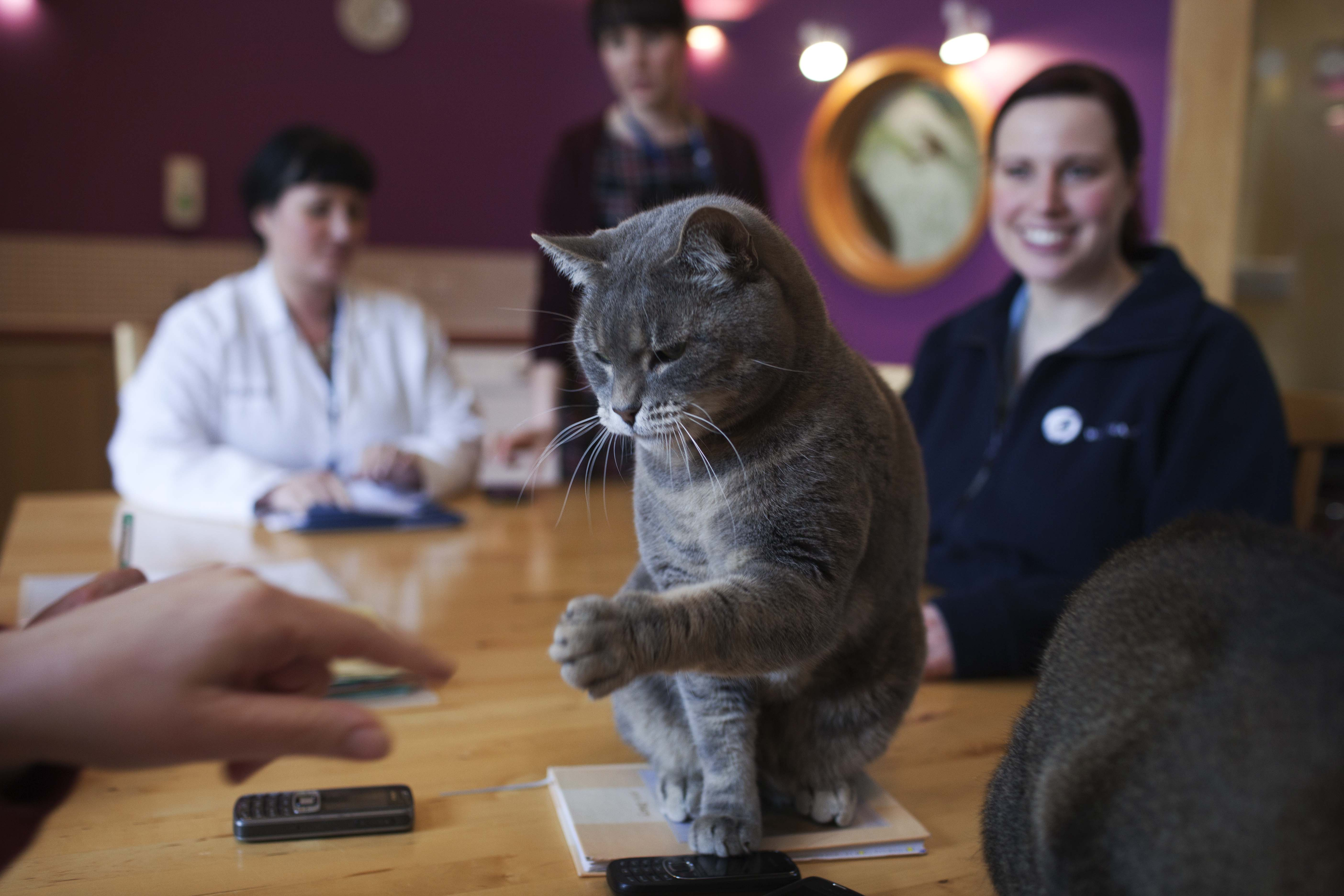 Employees at Mars are welcome to bring their pets to work.