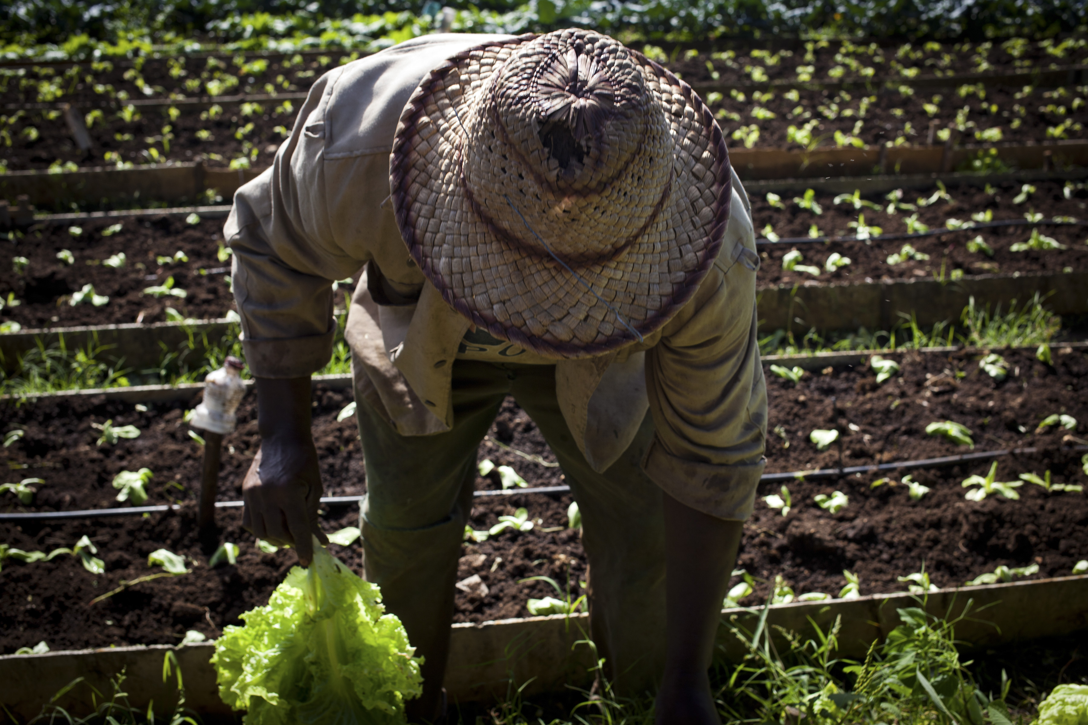 Cuba Aims for More Foreign Investment In Agriculture Sector