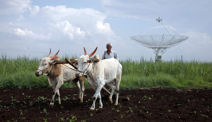 Farmer uses his oxen to till his land in front of a satellite dish set up in an adjacent field in Narayangaon