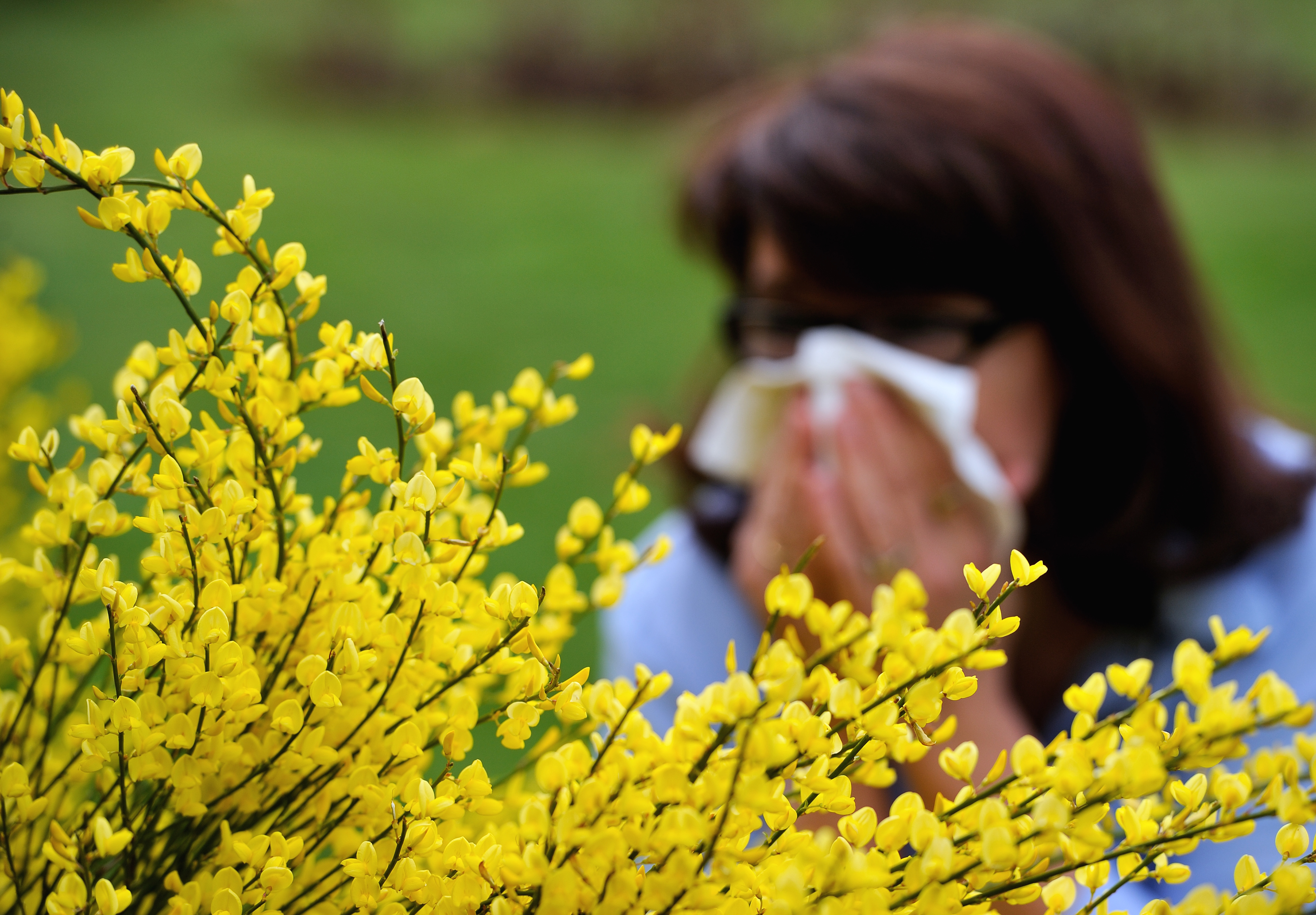 FRANCE-HEALTH-ALLERGIES-POLLEN
