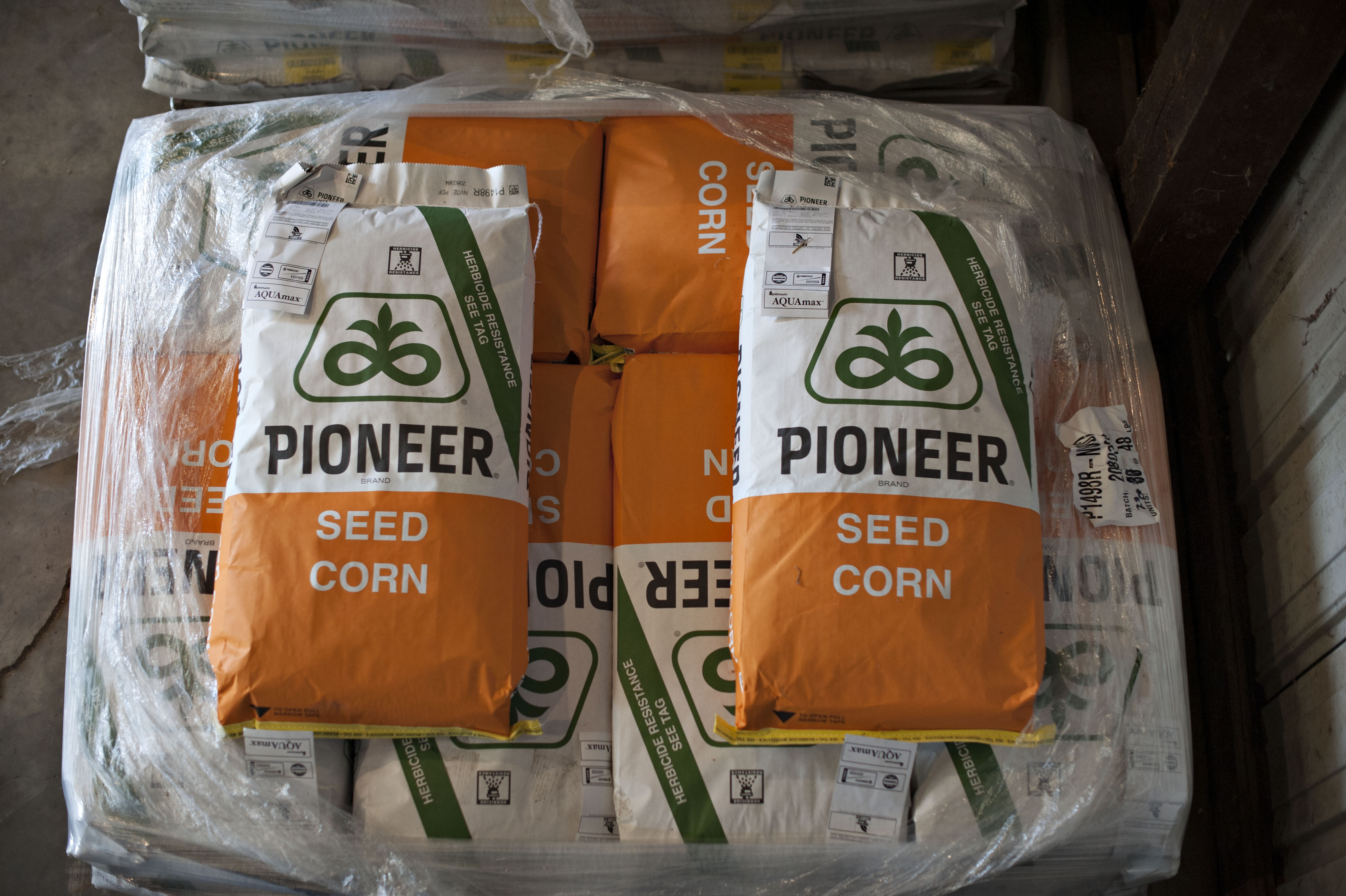 Farmers Take Corn Seed Delivery As Outlook For Exports Improves