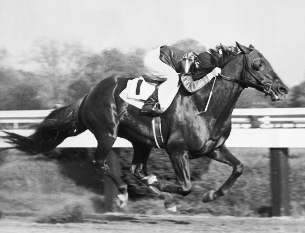 Whirlaway Pimlico Special