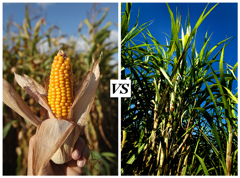 MAC08 Sugar VS. Corn