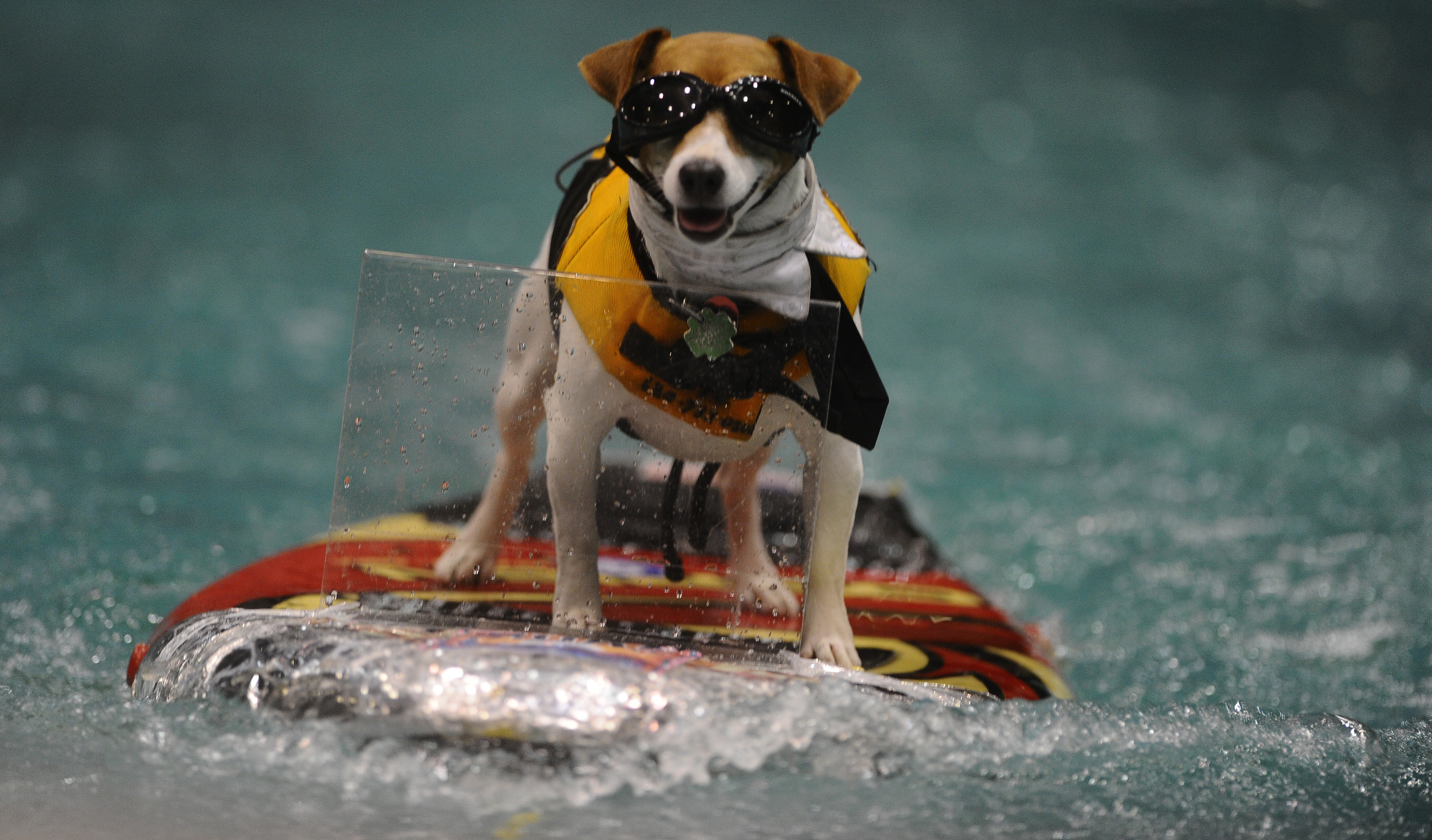 JAN 20th 2012.pics of . with this cold spell the 54th annual Toronto International Boat Show is wrap