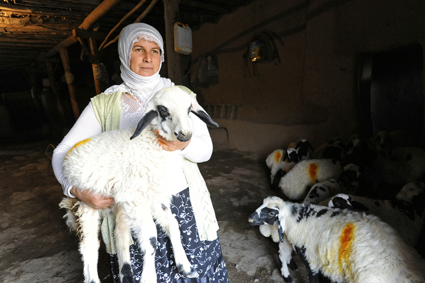 GOAT FARMER IN TURKEY WORKS WITH WHOLE PLANET FOUNDATION TO FUND BUSINESS. 2009