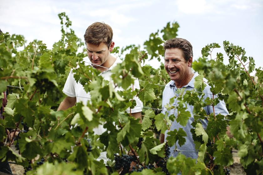 Huard (left) and Marino examine red-wine grapes at a Washington vineyard.