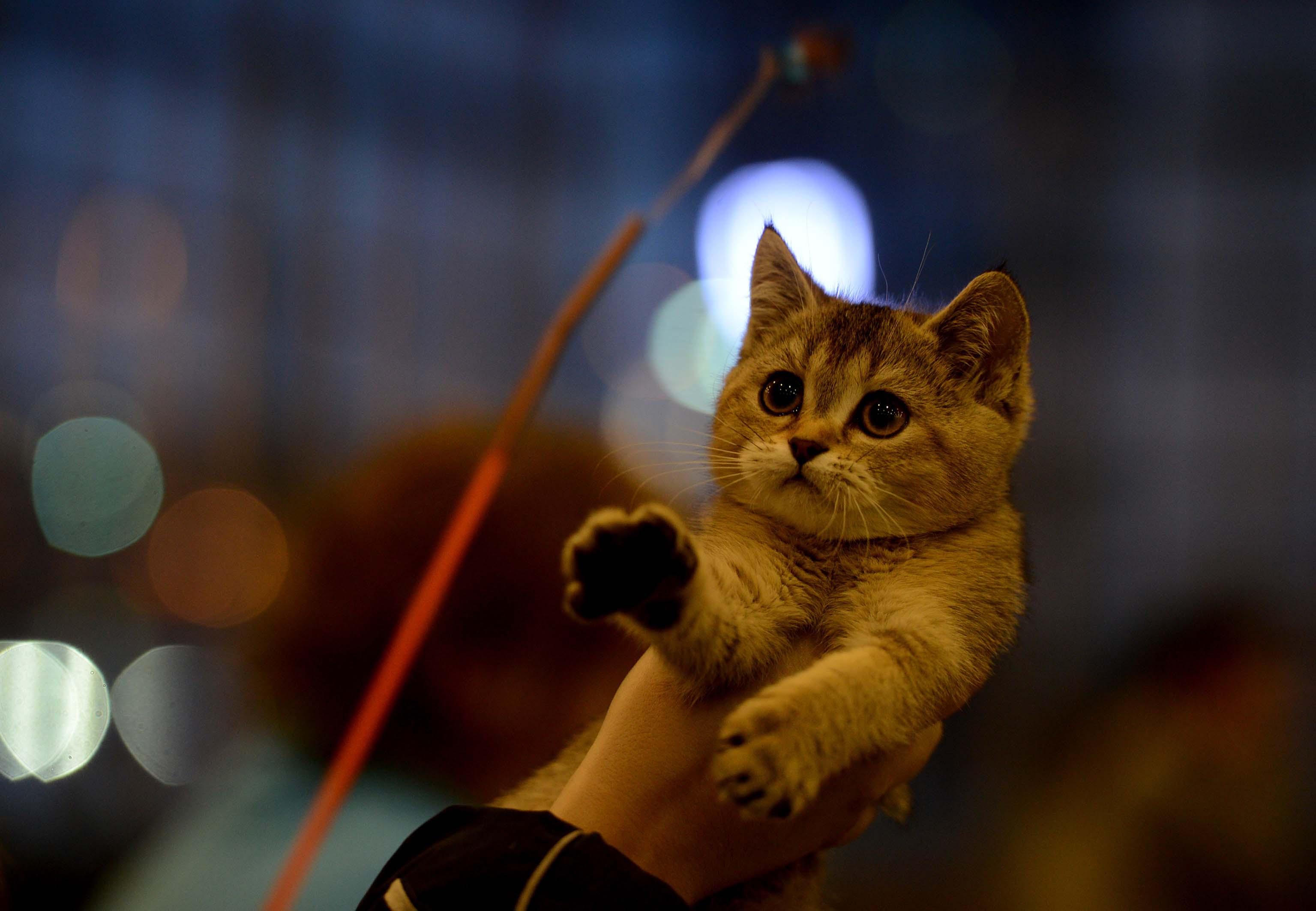 Kitten&Puppy Fair