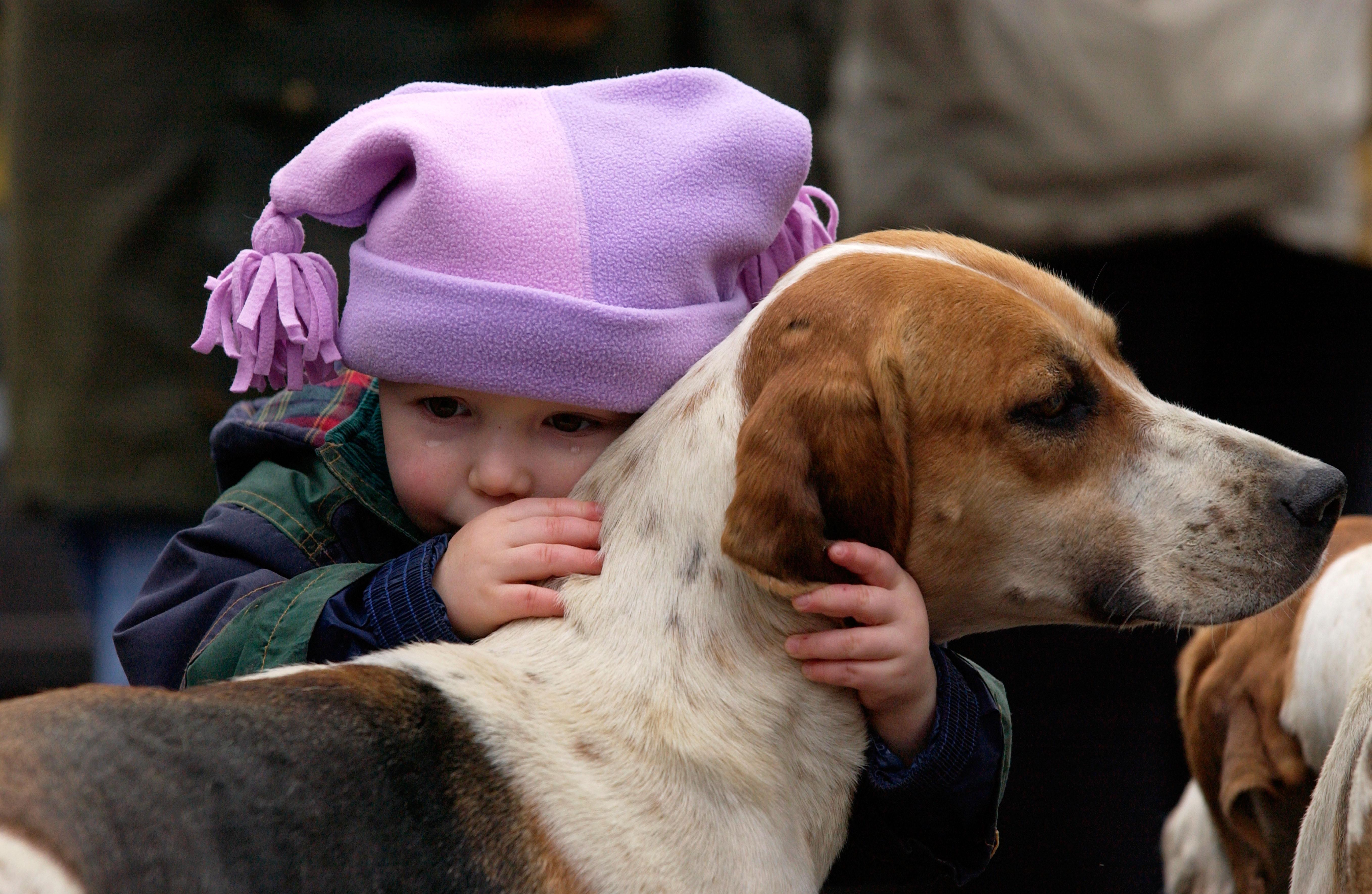 Child hugging a Fox hound