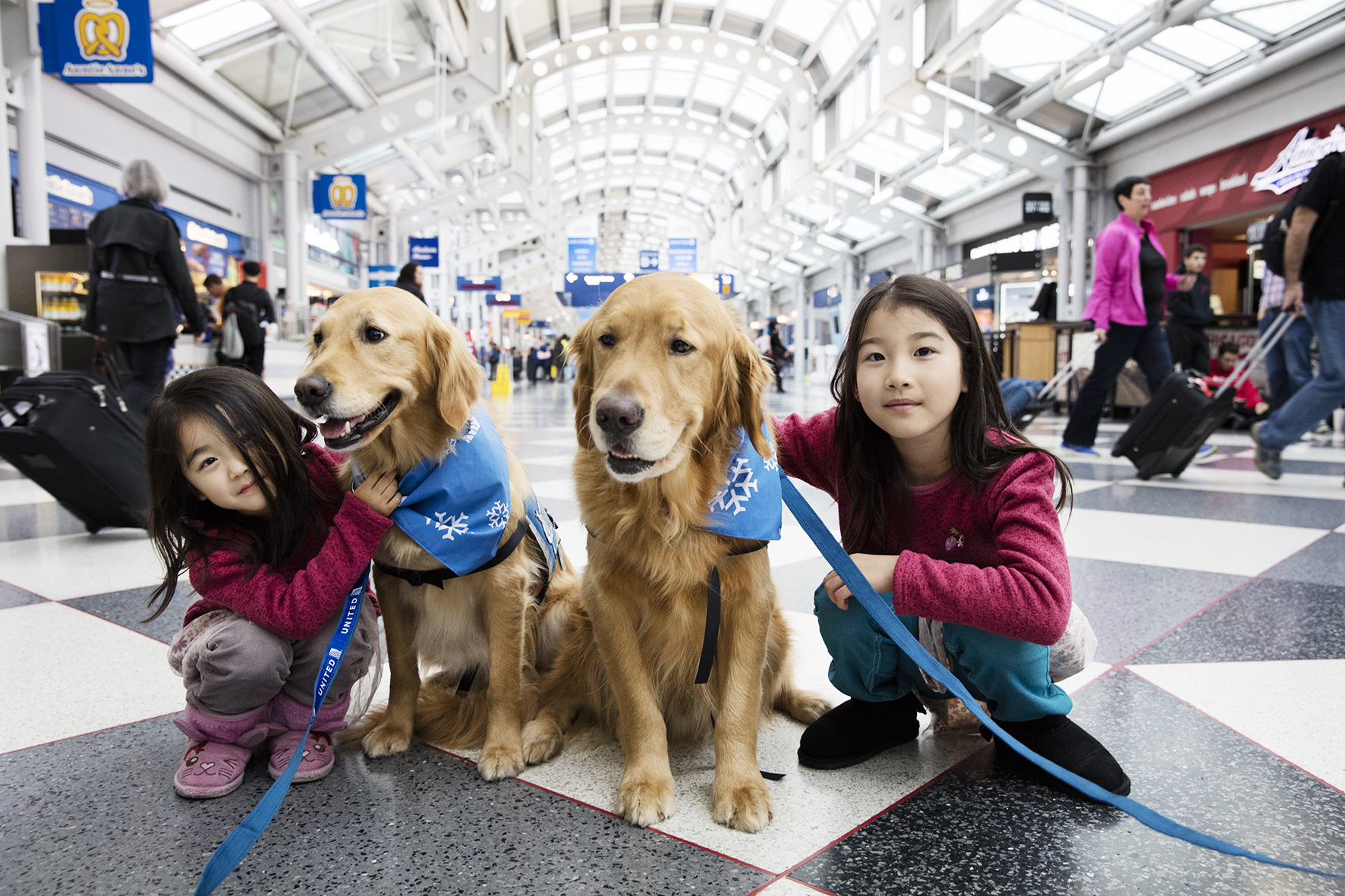 Comfort dogs from United Airlines at Chicago O'Hare International Airport on Dec. 21, 2015.