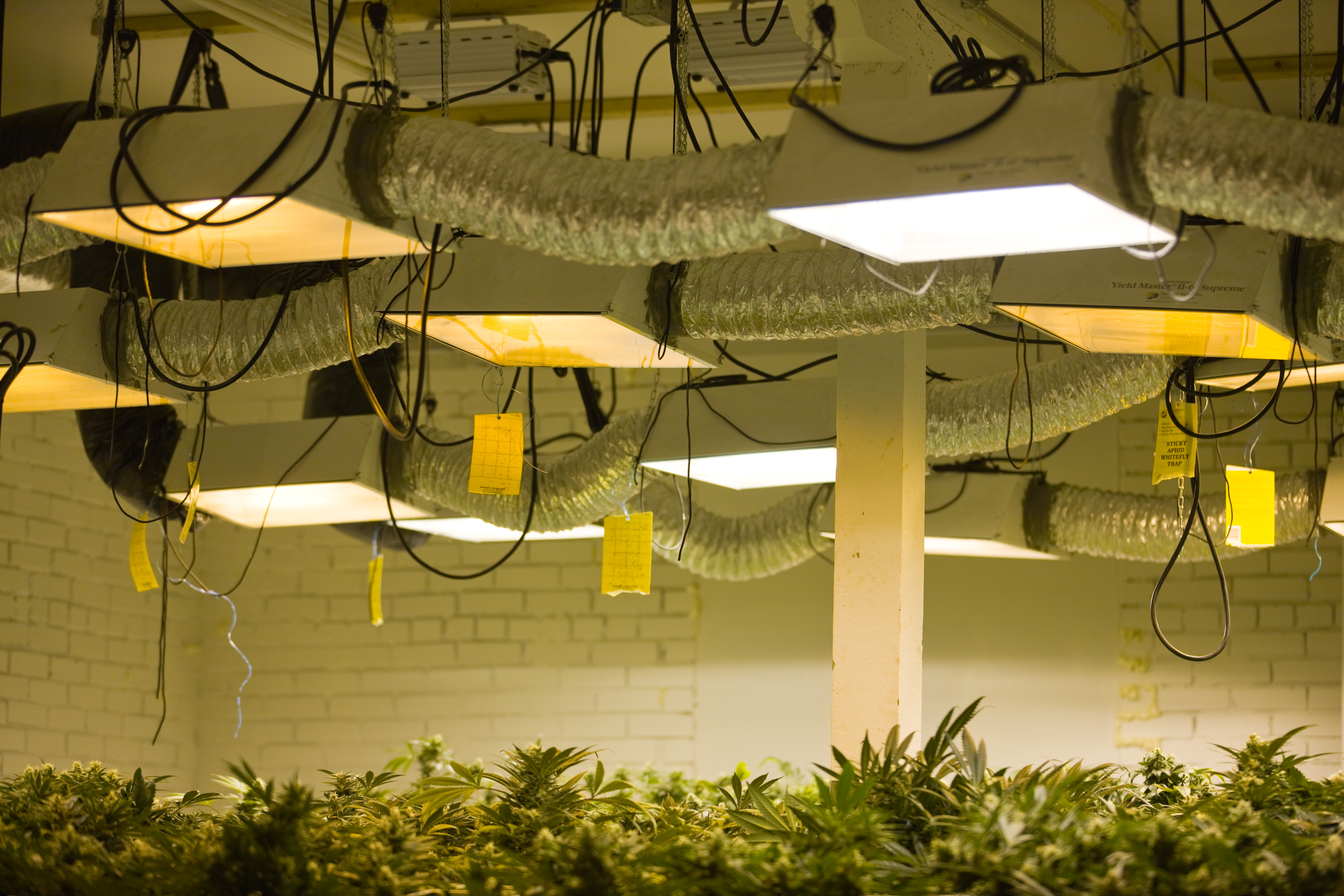 A Medical Marijuana Operation In Colorado Run By Kristi Kelly, Co-Founder Of Good Meds Network