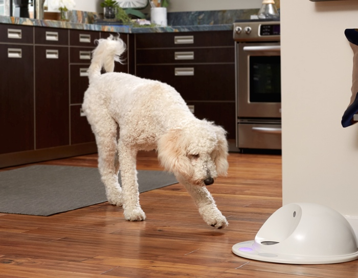 The CleverPet connected pet feeder.