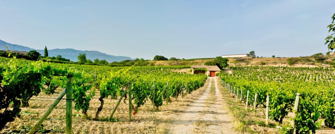 The El Pisón vineyard at Bodegas y Viñedos Artadi in Spain's Rioja wine region.