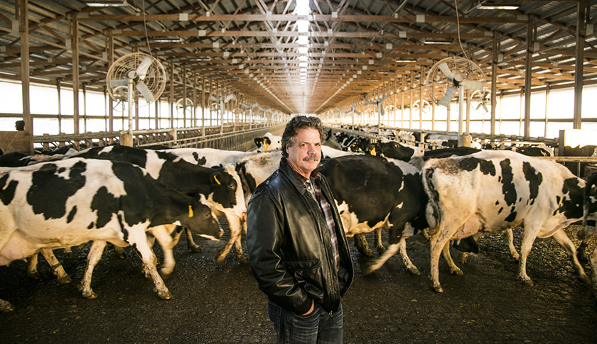 Dairy.Oaks.Farm.14
