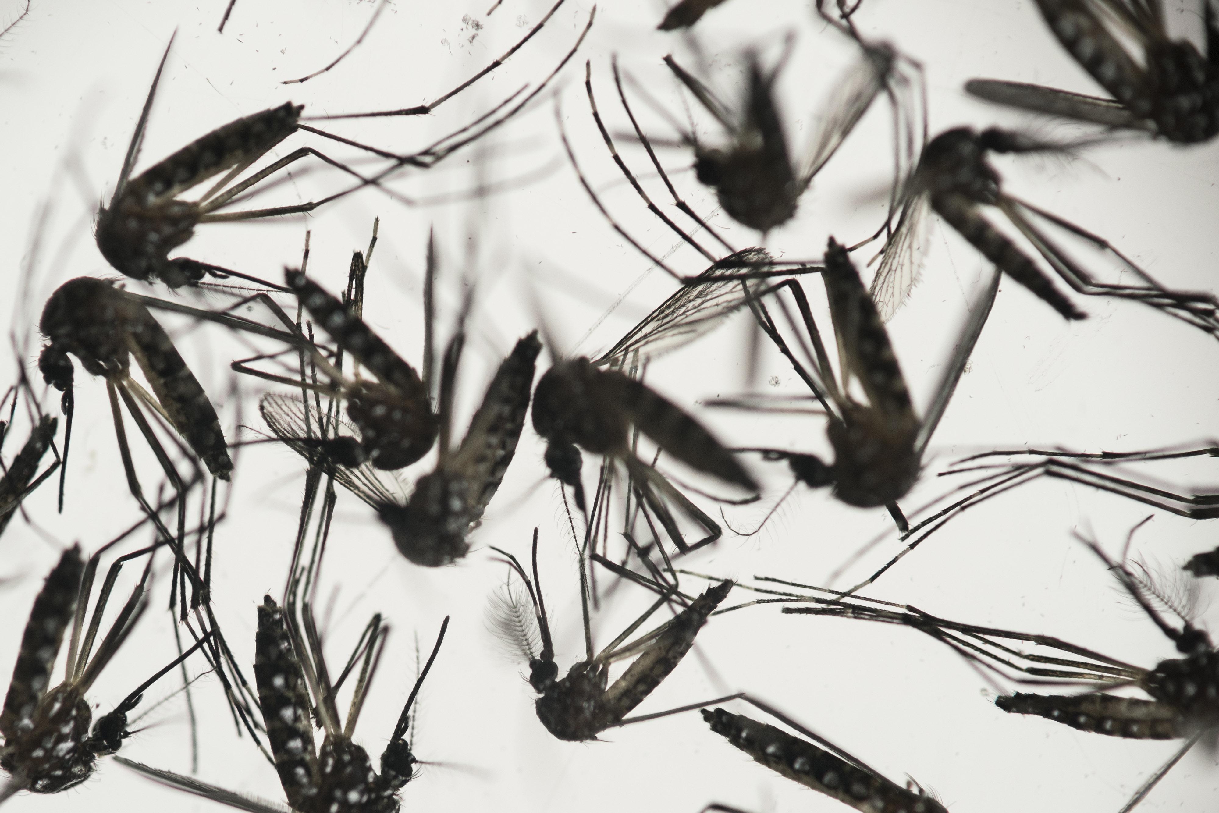 APTOPIX Brazil Zika Virus