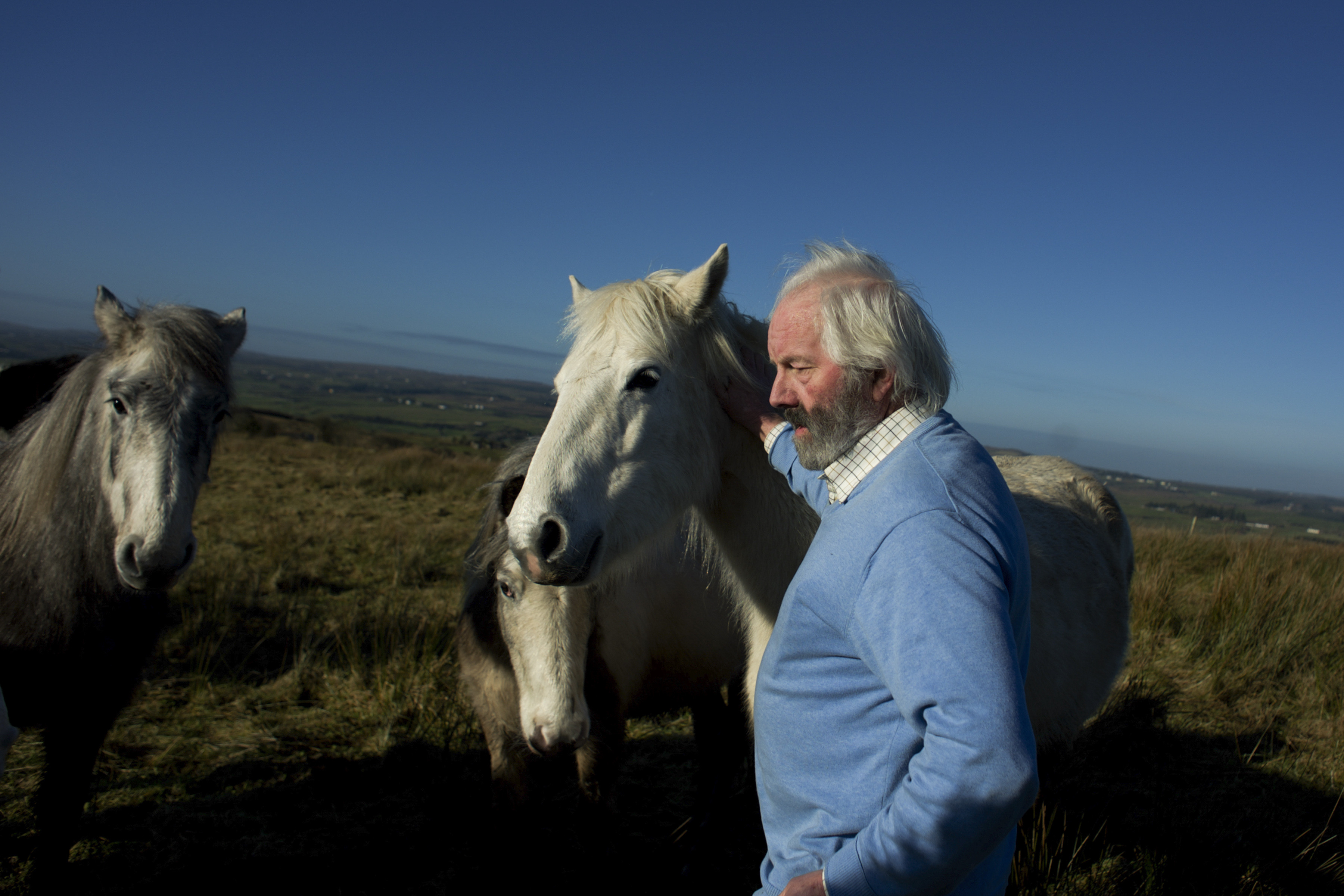Willie Daly, one of Ireland?s last traditional matchmakers, pets some of his horses in a field close to his farmhouse in Ennistymon, Ireland.