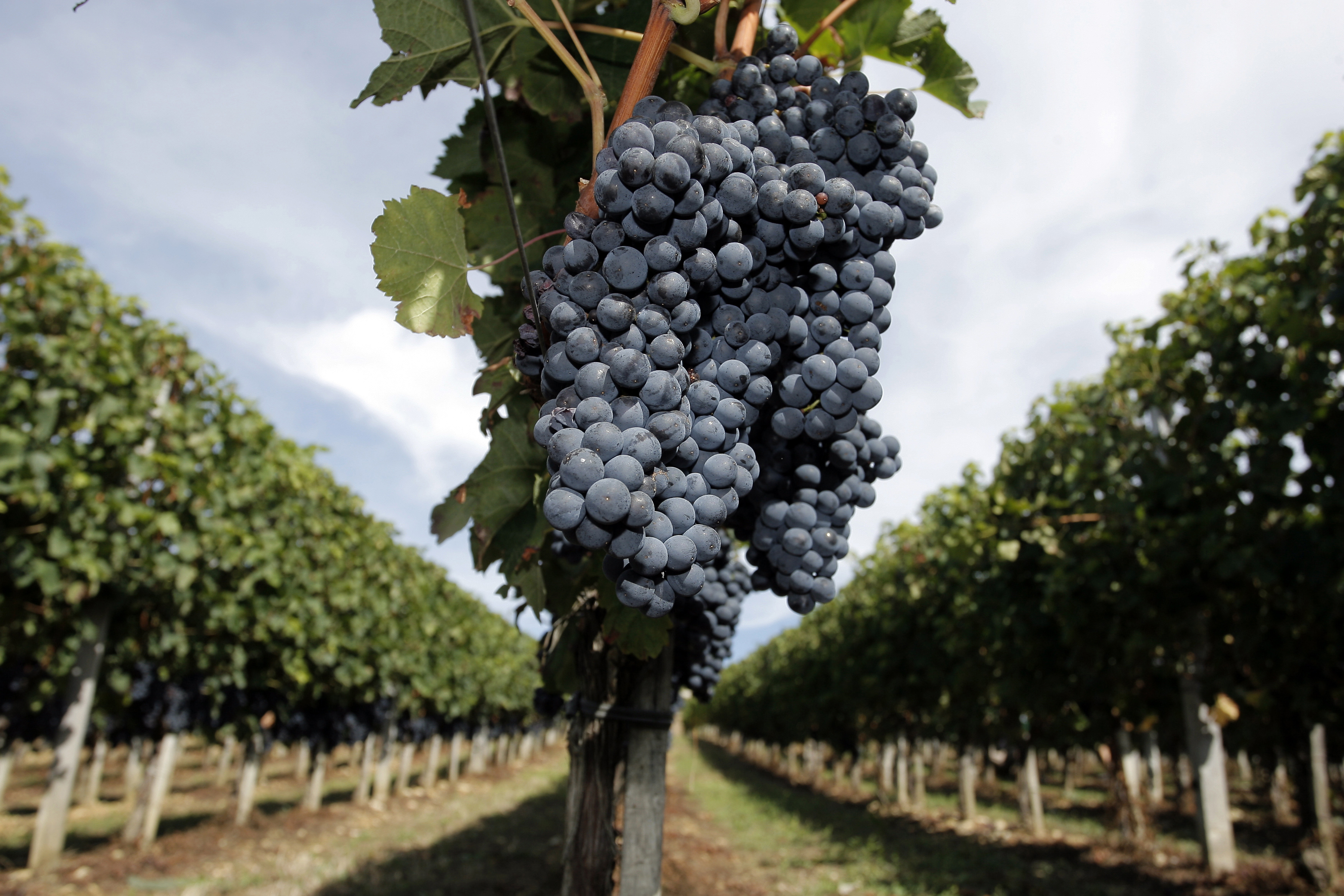 FRANCE-FINANCE-AGRICULTURE-WINE
