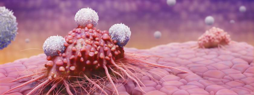 An illustration of T-cells fighting cancer cells.