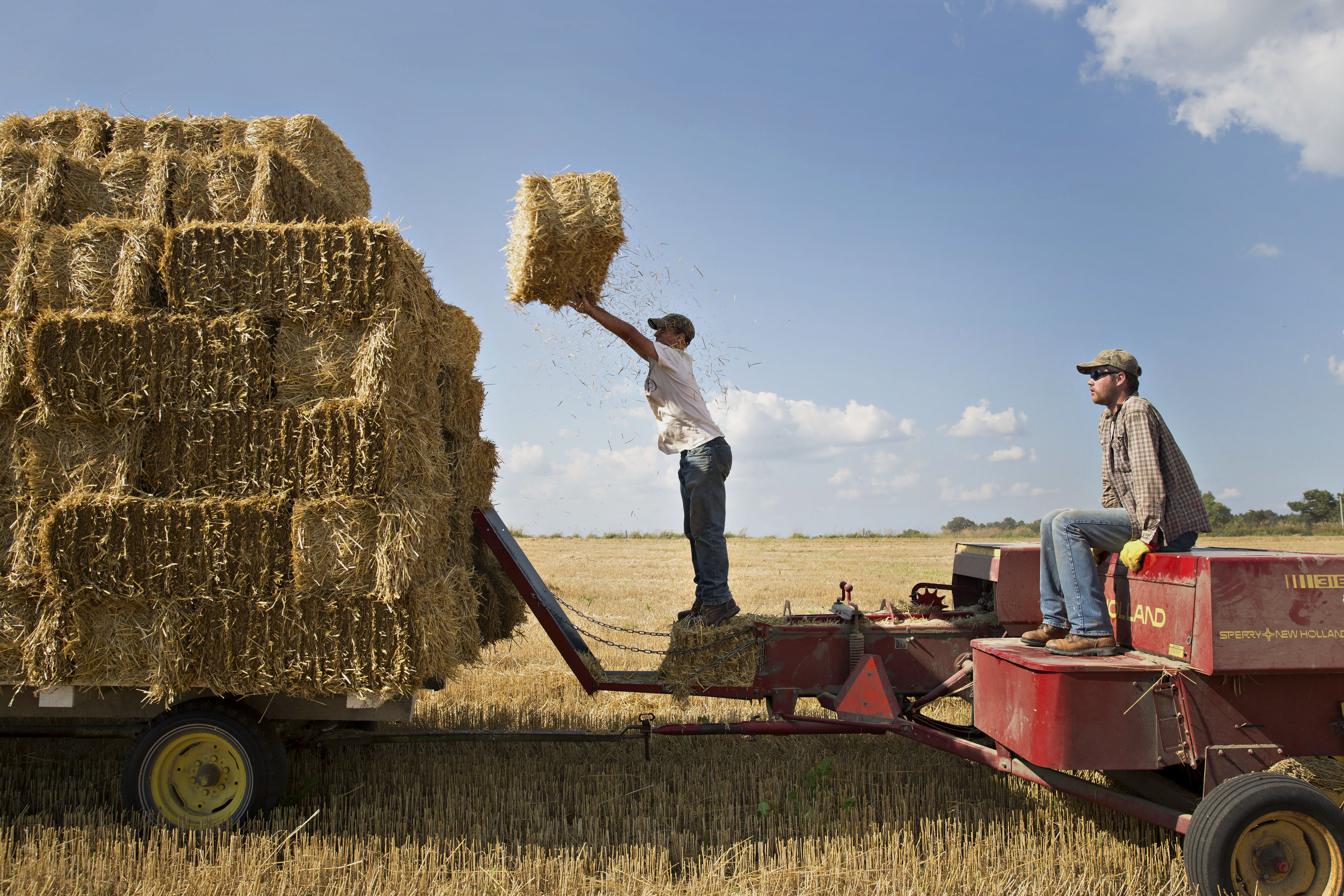 Farm hands stack bales of straw as they are collected in a field of where soft red winter wheat had been harvested in Kirkland, Illinois, U.S., on Thursday, July 23, 2015. Photographer:  Daniel Acker/Bloomberg
