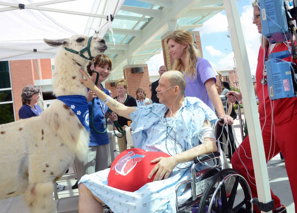 A patient pets a llama at Methodist Le Bonheur Healthcare, No. 8 on this year's list of the 20 Best Workplaces in Health Care.