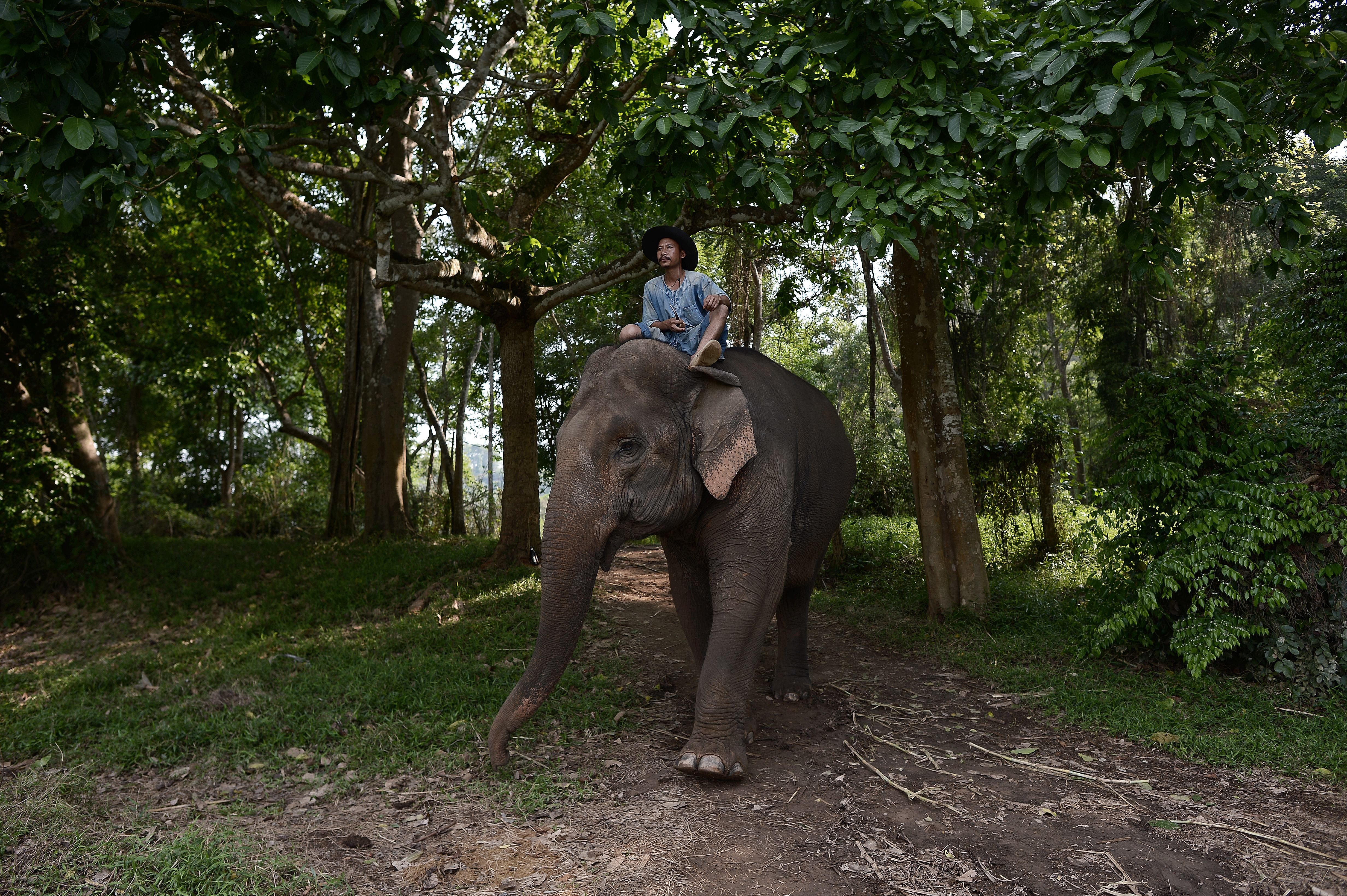 THAILAND-ANIMALS-GASTRONOMY