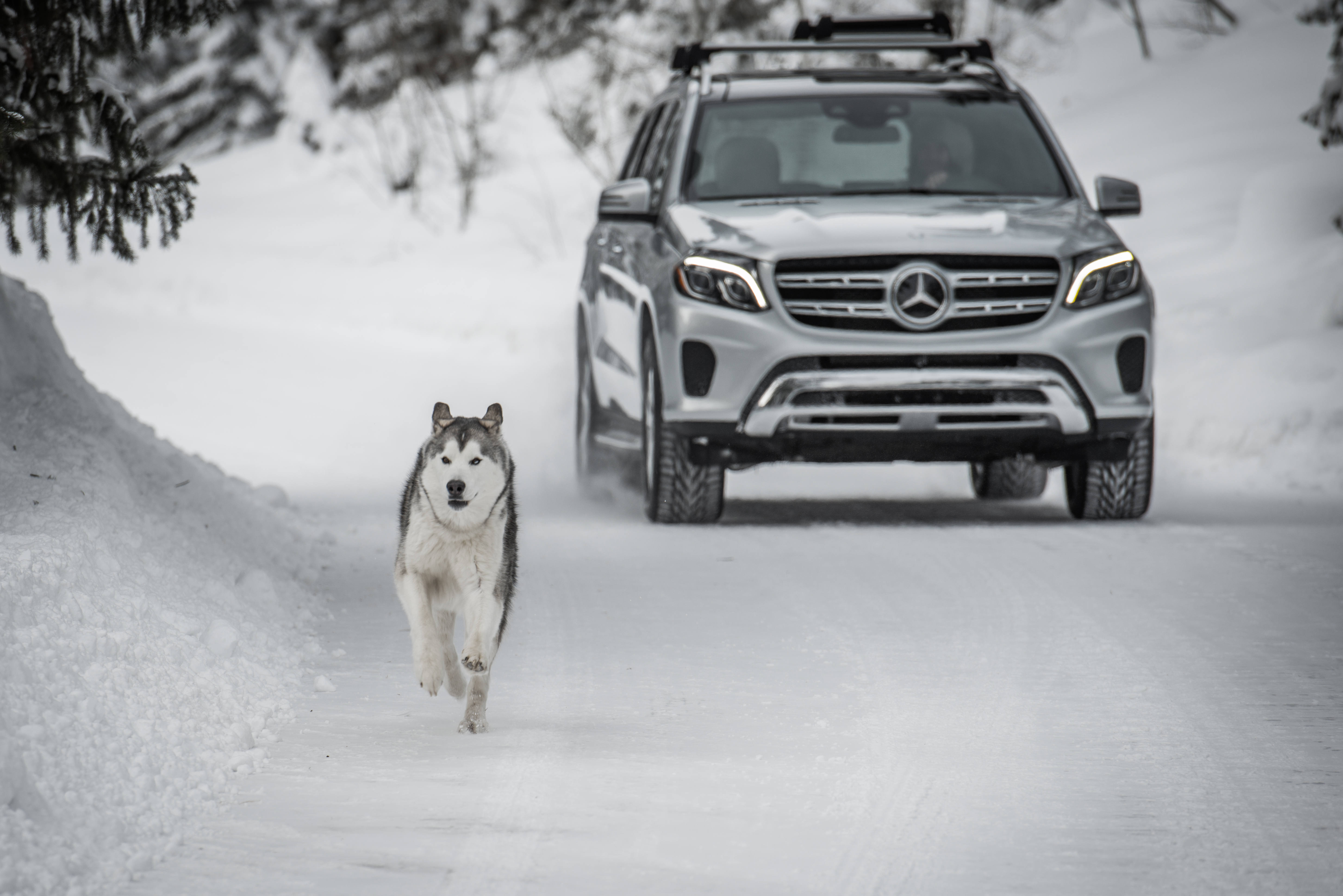Instagram influencer Loki the wolfdog promotes the Mercedes-Benz GLS in 360-degree videos.