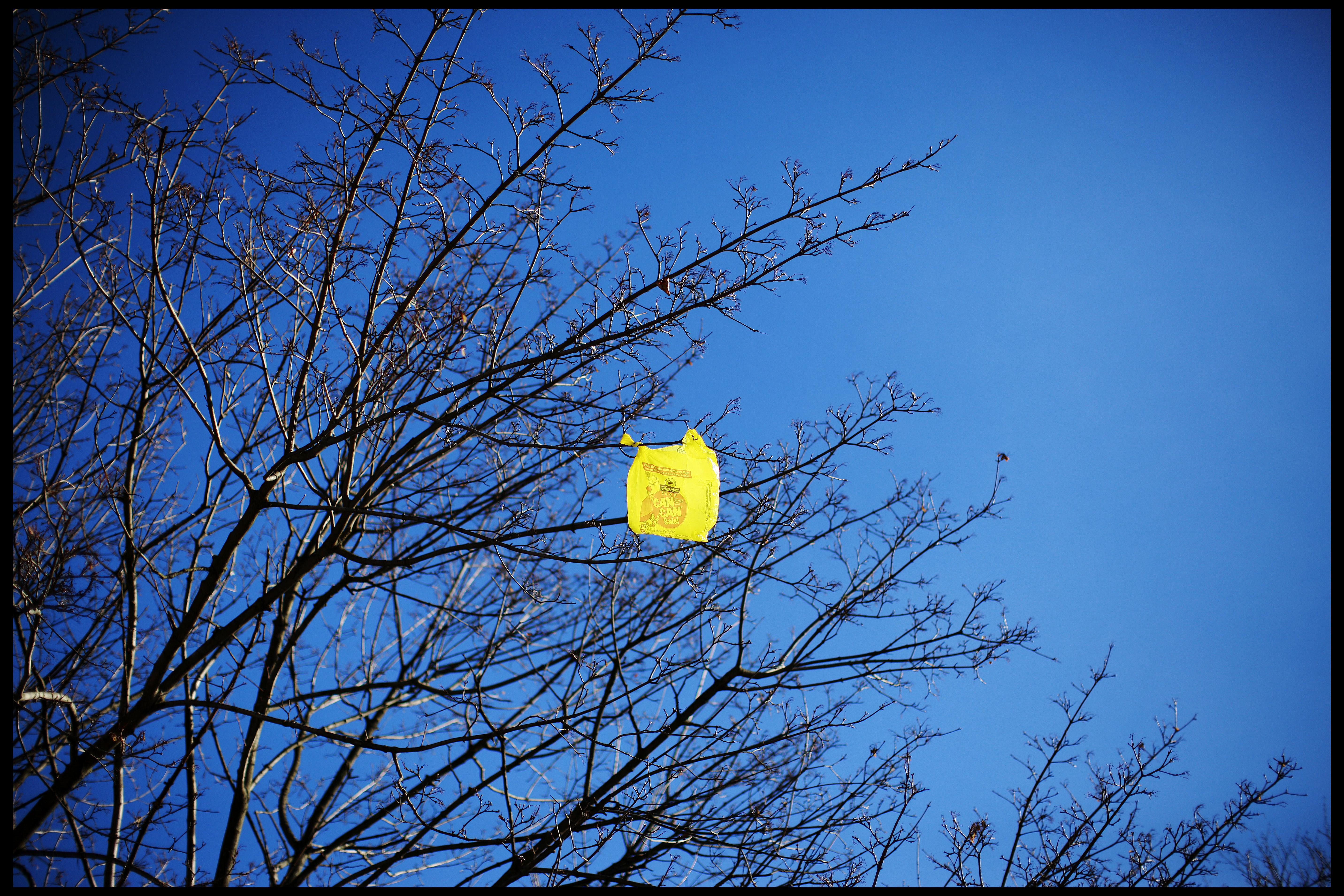 USA - Environment - Plastic Bag in Tree