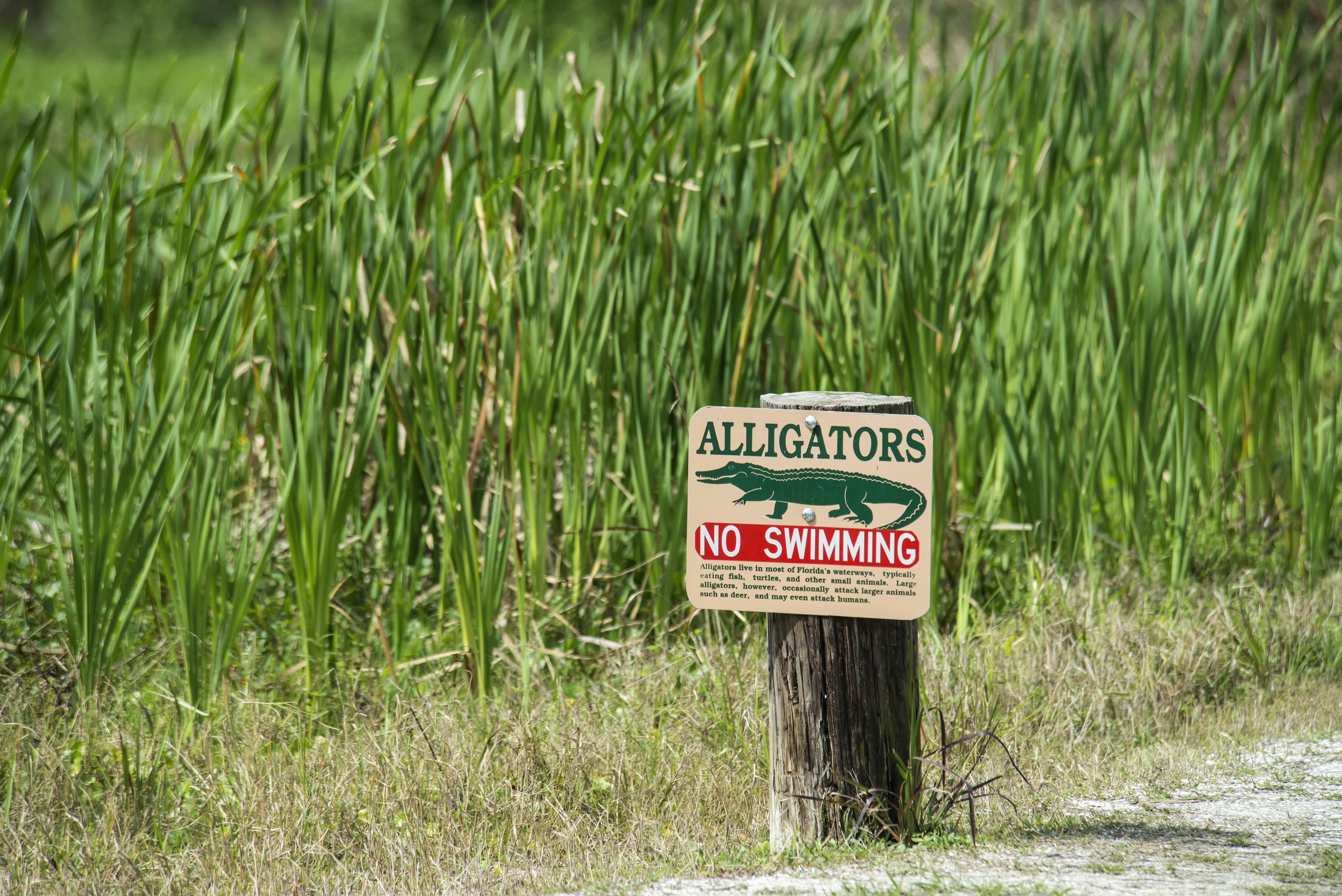 Alligator Warning Sign At Tosohatchee Wildlife Management Area; Florida, USA