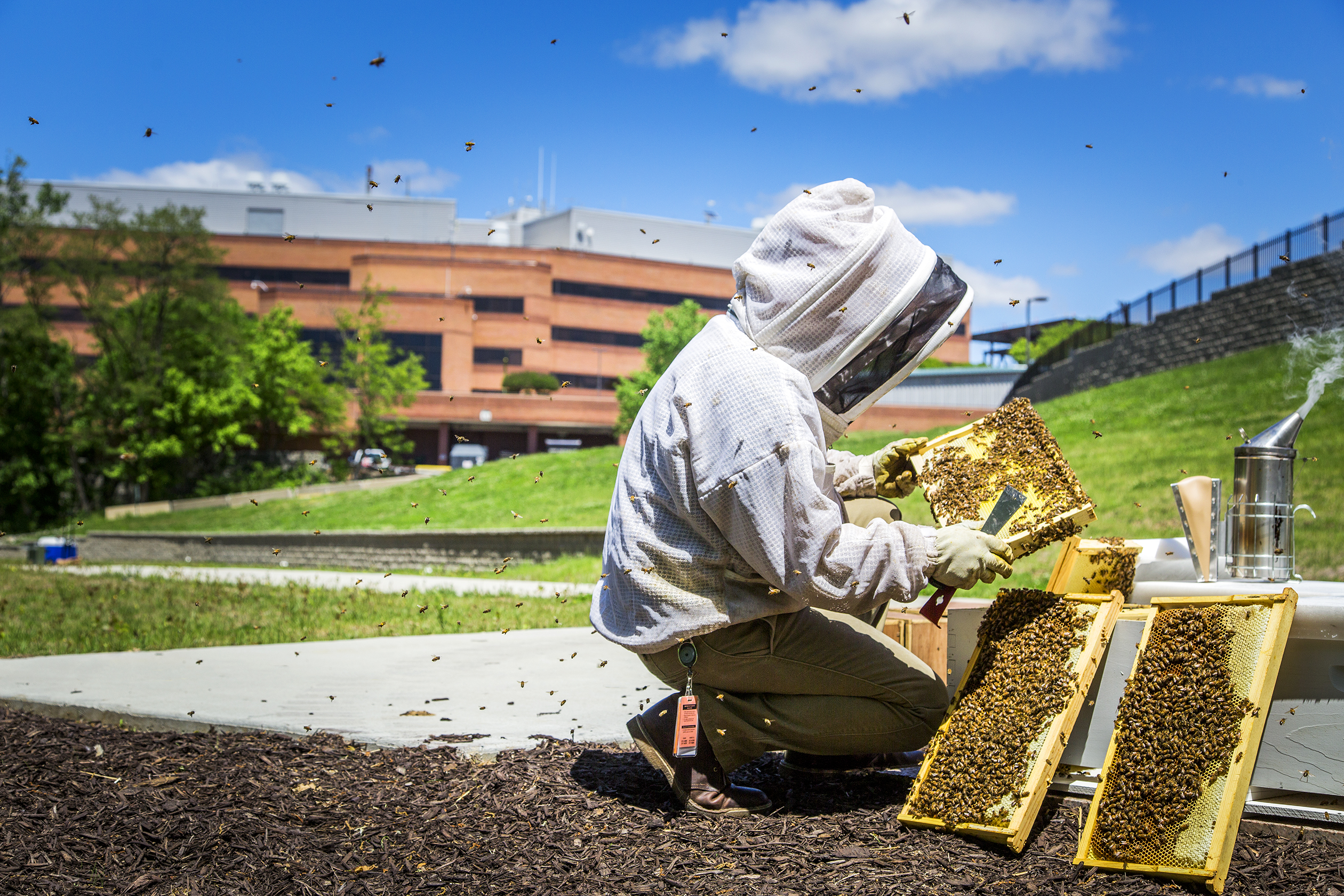 Alex Inberg, the Varroa Project lead, checks hives of honey bees located outside Monsanto's research facility in Chesterfield, Mo., on Thursday, May 5, 2016. Photo by Ryan Donnell