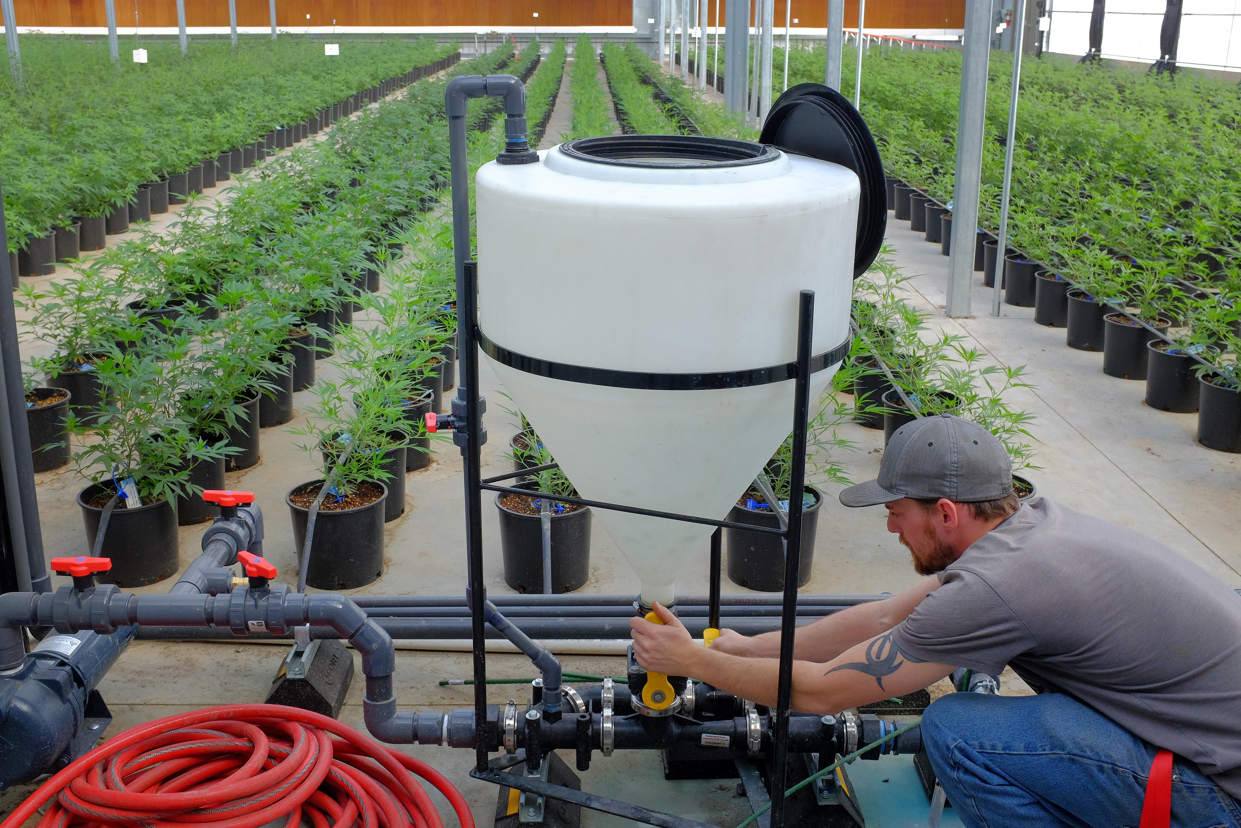 Marijuana Growing At Los Suenos Farms As Colorado's $1-Billion Pot Industry Saves Towns