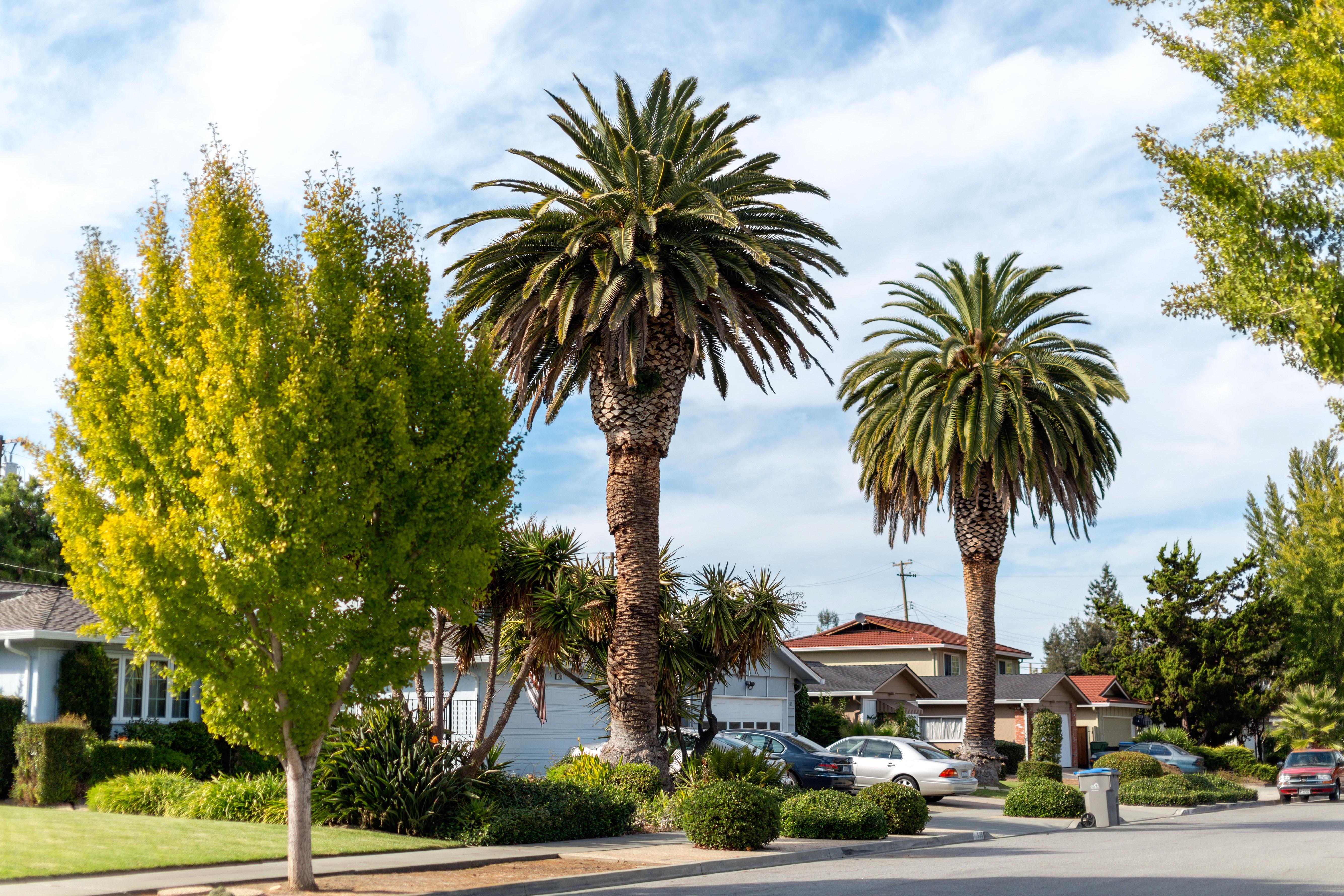Residential neighborhood in San Jose, California
