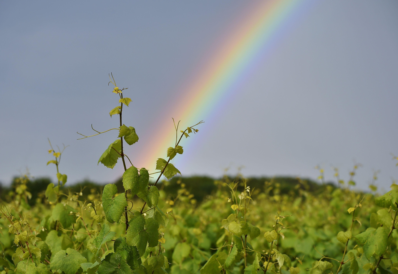 FRANCE-WEATHER-VINEYARD-RAINBOW-FEATURE
