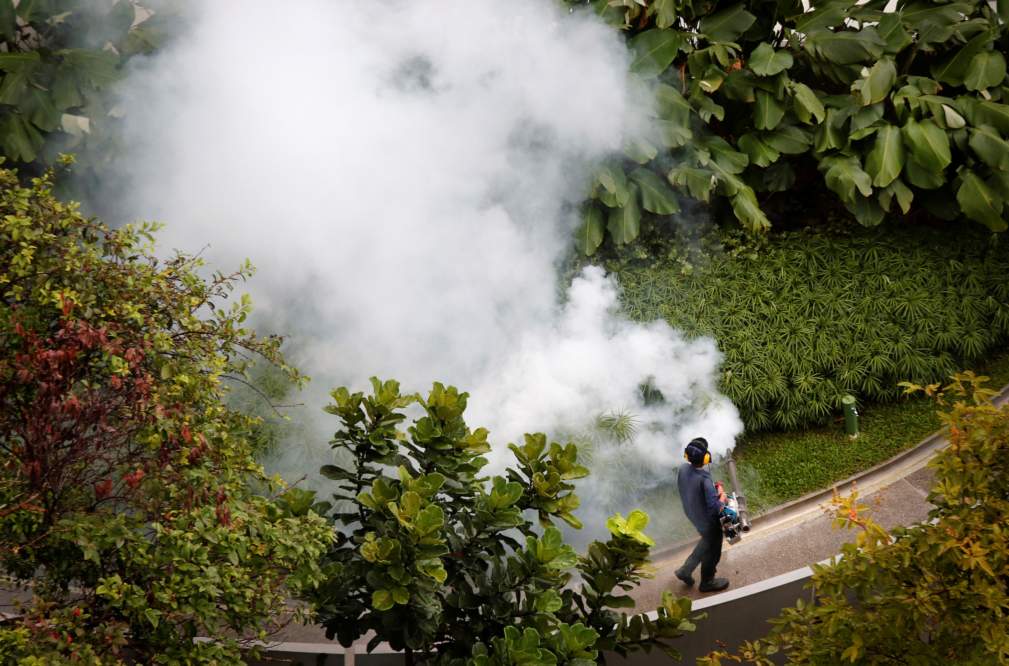 Contractor fogs a condominium garden in Singapore in an effort to kill mosquitoes