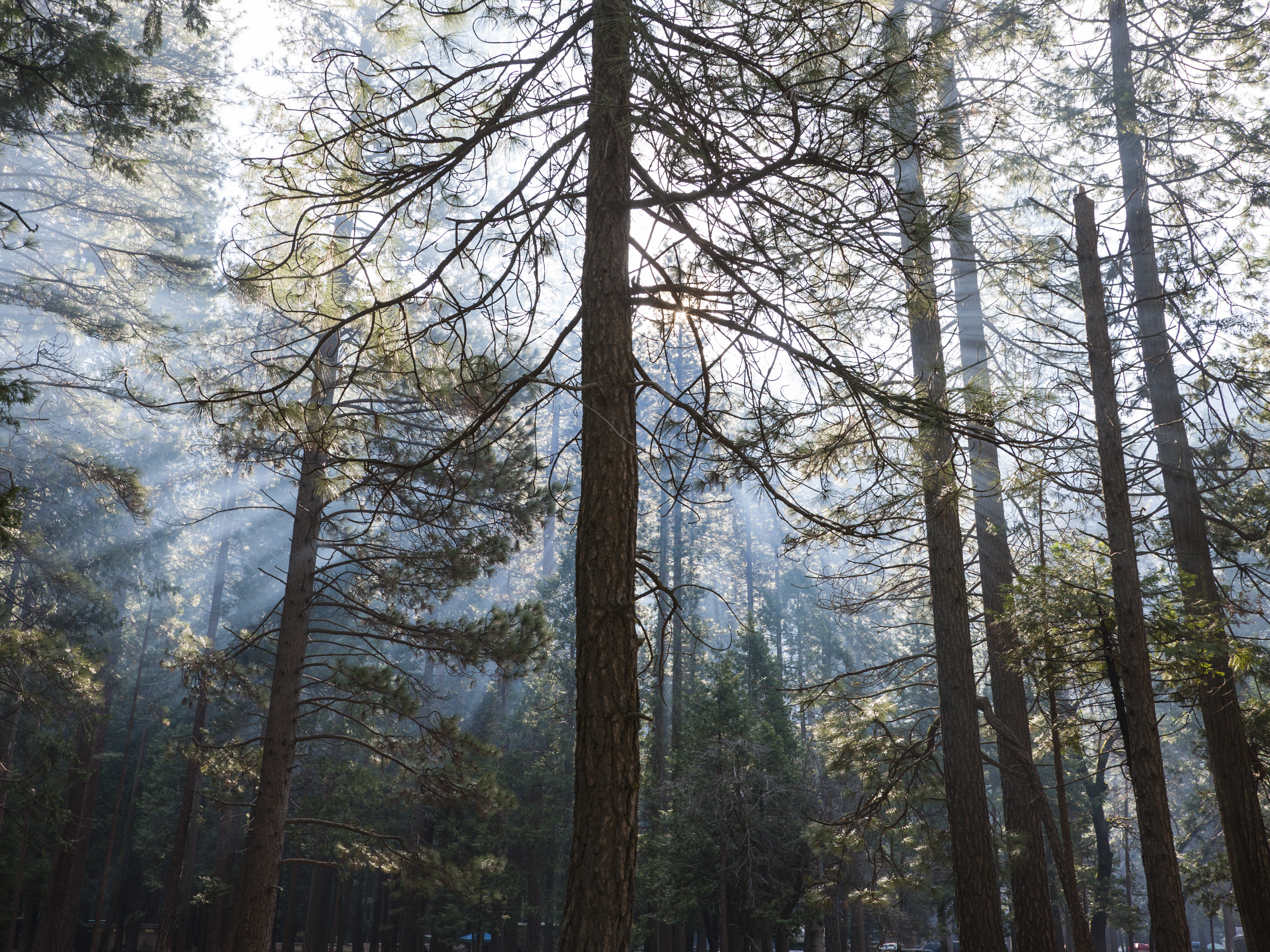 trees with sunlight streaming through