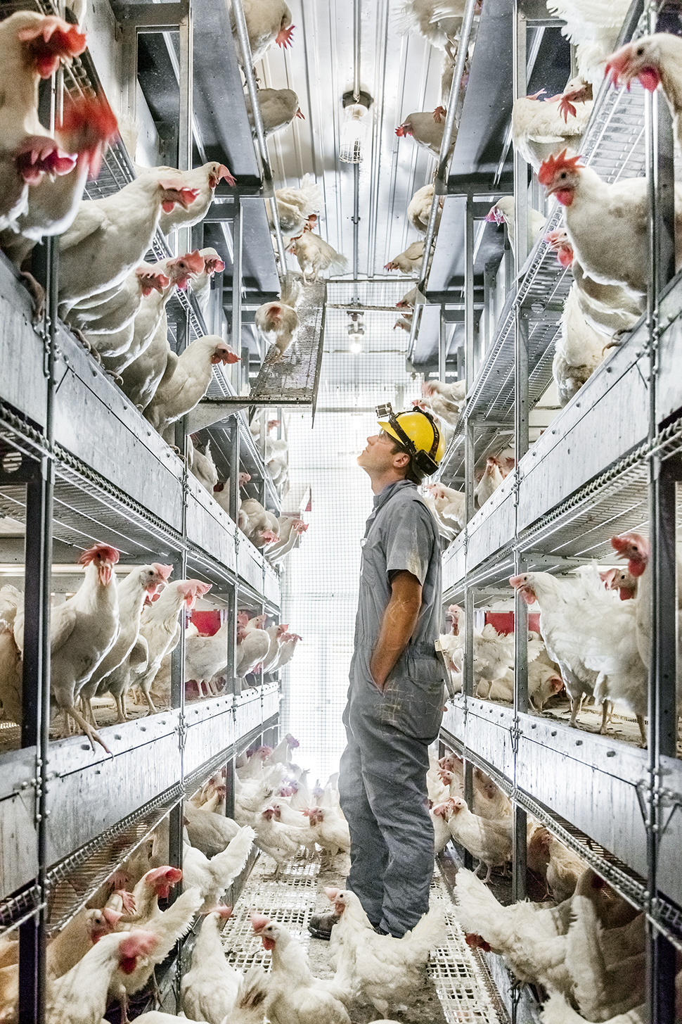 Inside McDonald's Bold Decision to Go Cage-Free | Fortune
