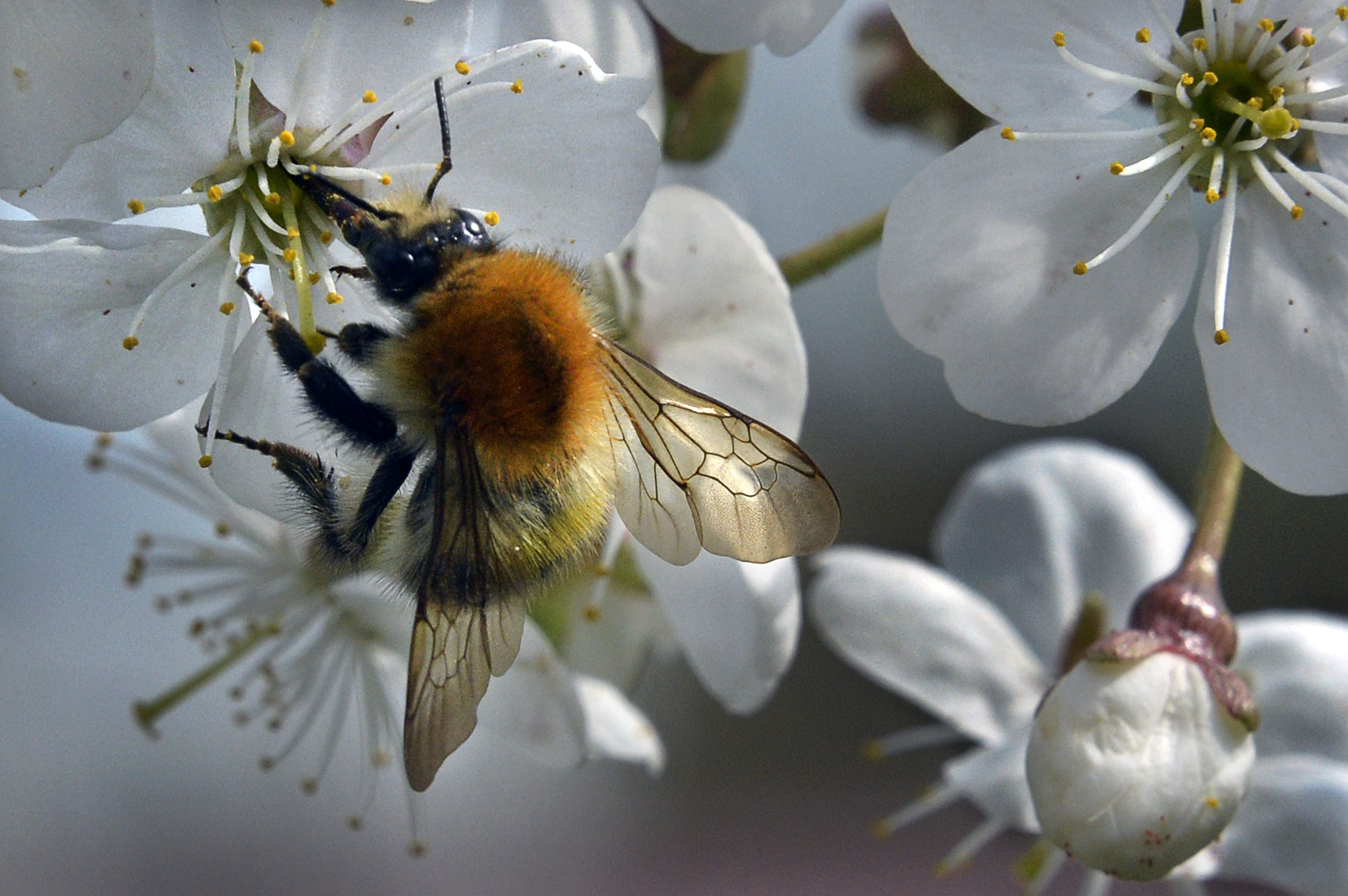 RUSSIA-BEE-NATURE-FEATURE