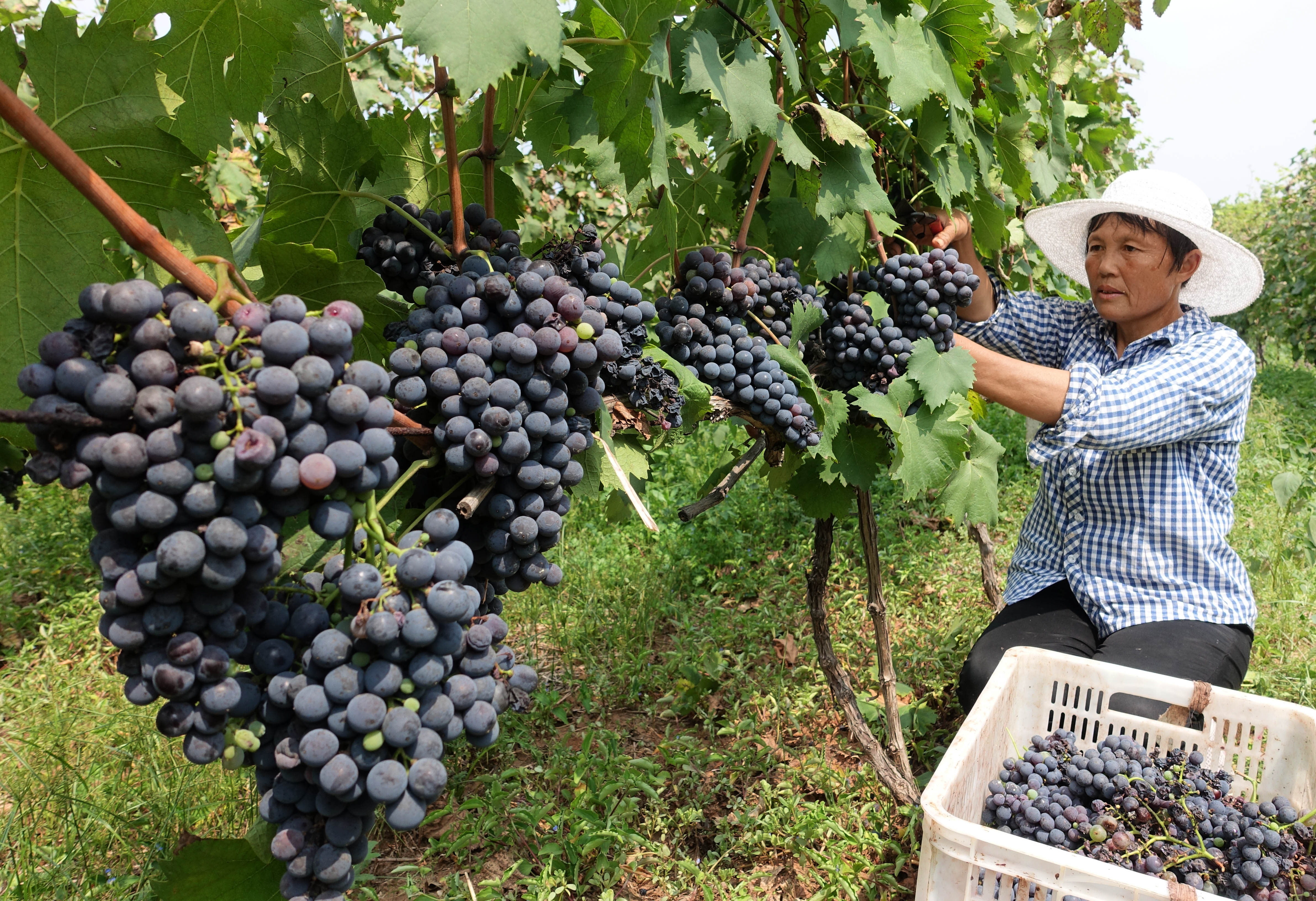 Chinese wine culture goes mainstream