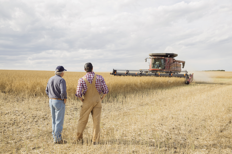 Farmers watching combine harvester in wheat field