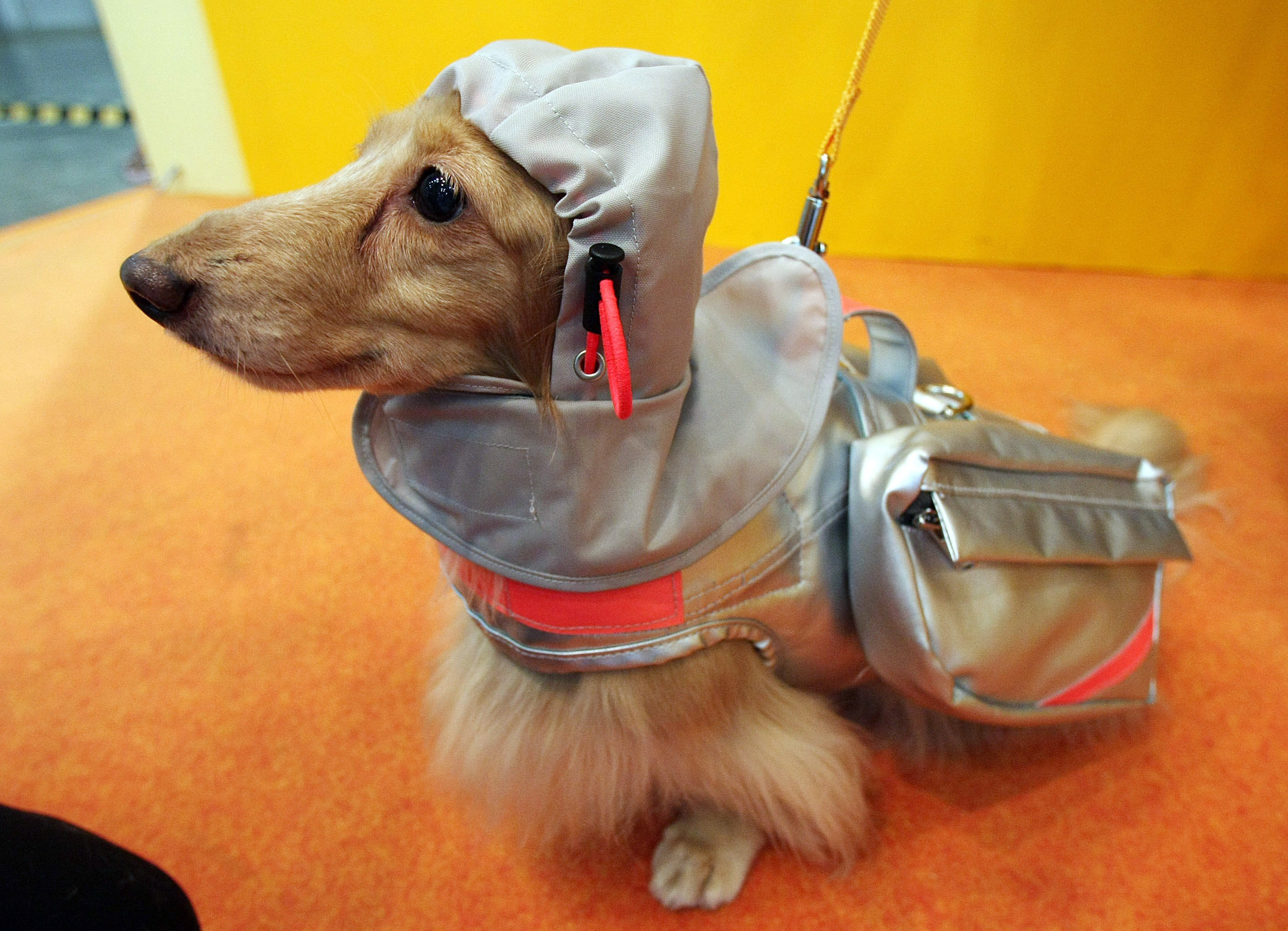 New Rescue Jacket Protect Dogs From Natural Disaster