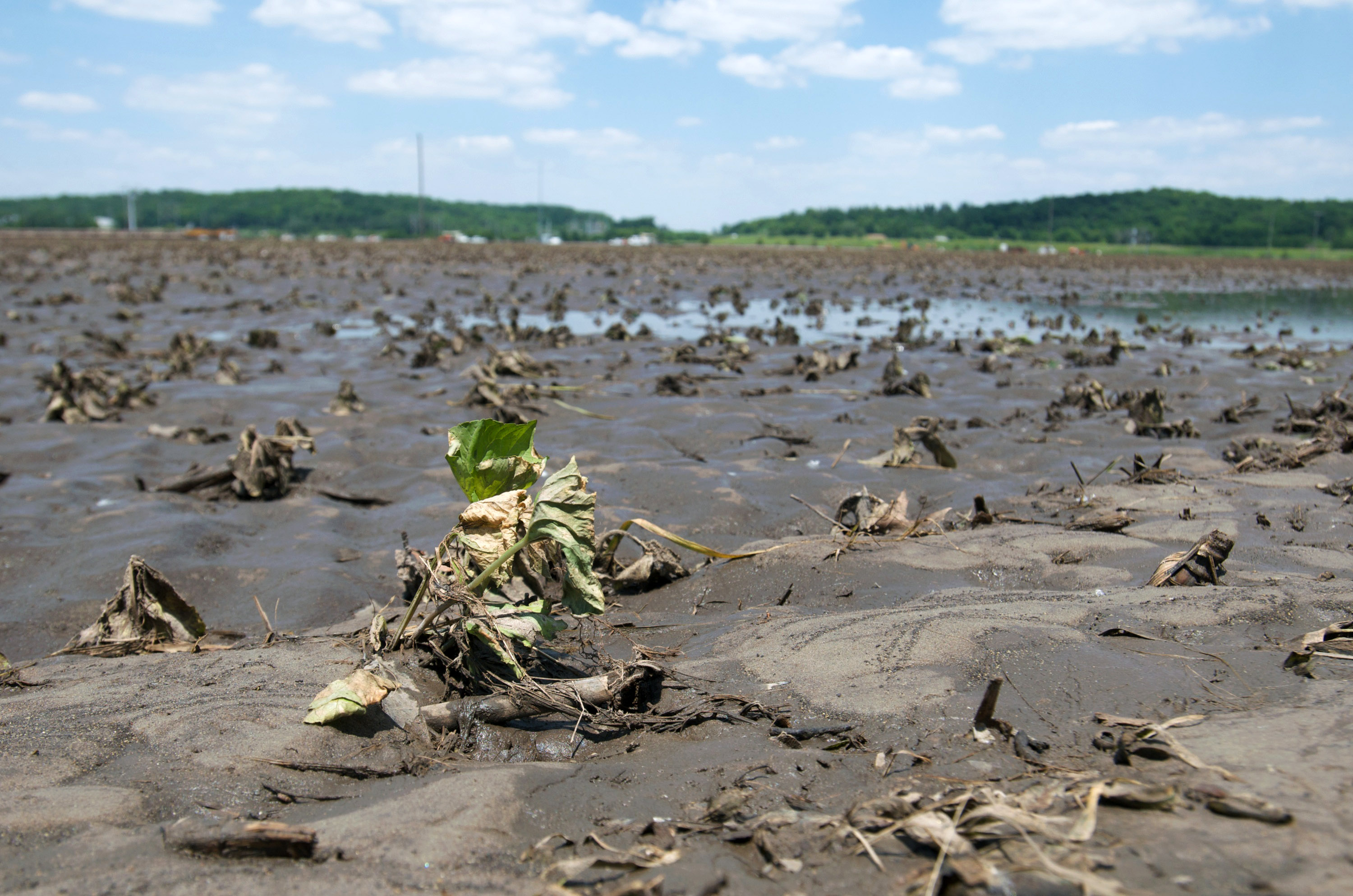Food Prices Expected To Rise As Midwest Flooding Damages Corn Crops
