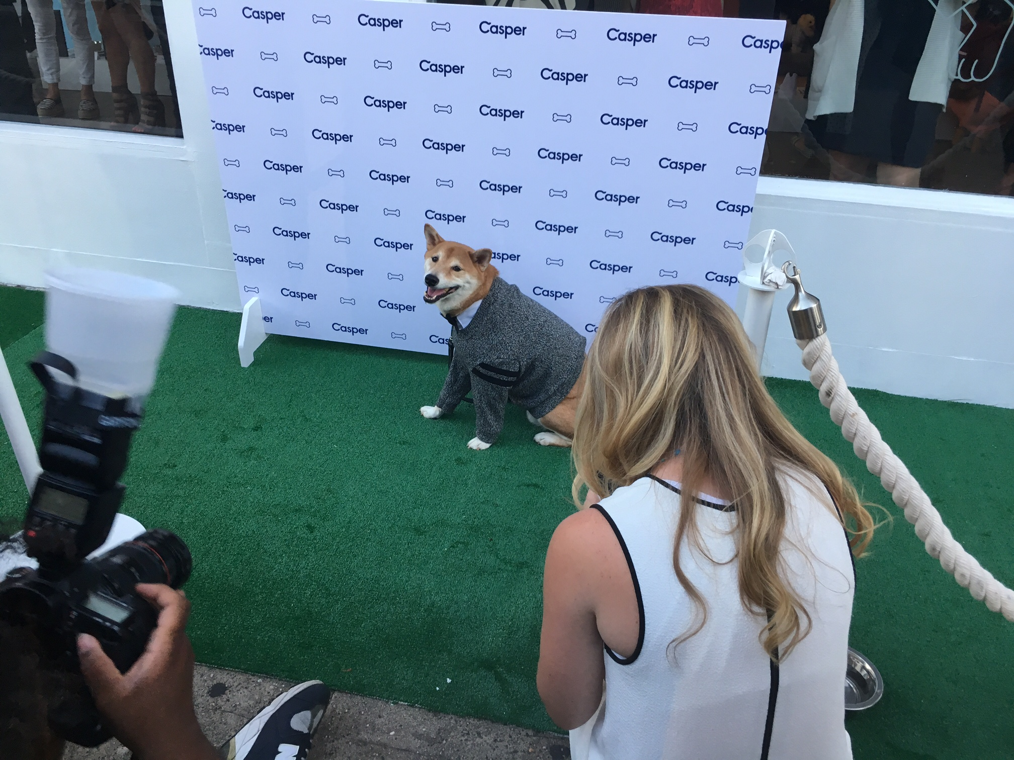 The Menswear Dog poses on the carpet before a product launch.