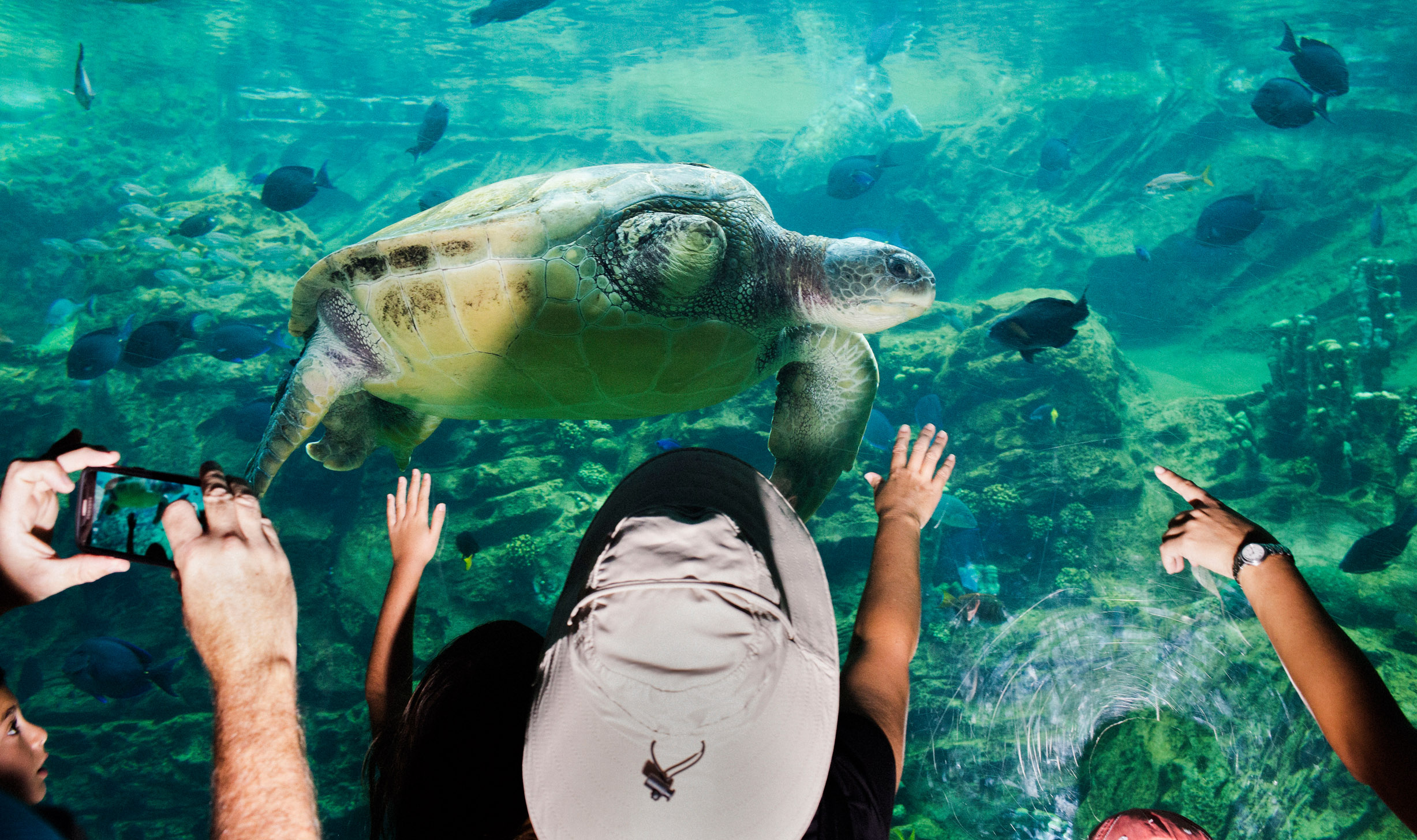 """Guests get up close to sea turtles at """"TurtleTrek,"""" an attraction that educates visitors on the species' plight in the wild."""