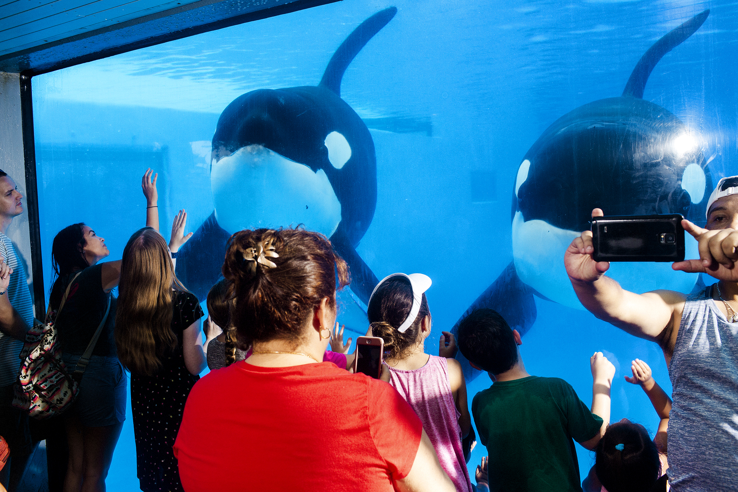 Killer whales and trained-animal shows have been star attractions at SeaWorld's theme parks, but controversy triggered by a whale trainer's death in 2010 has dragged the company down.