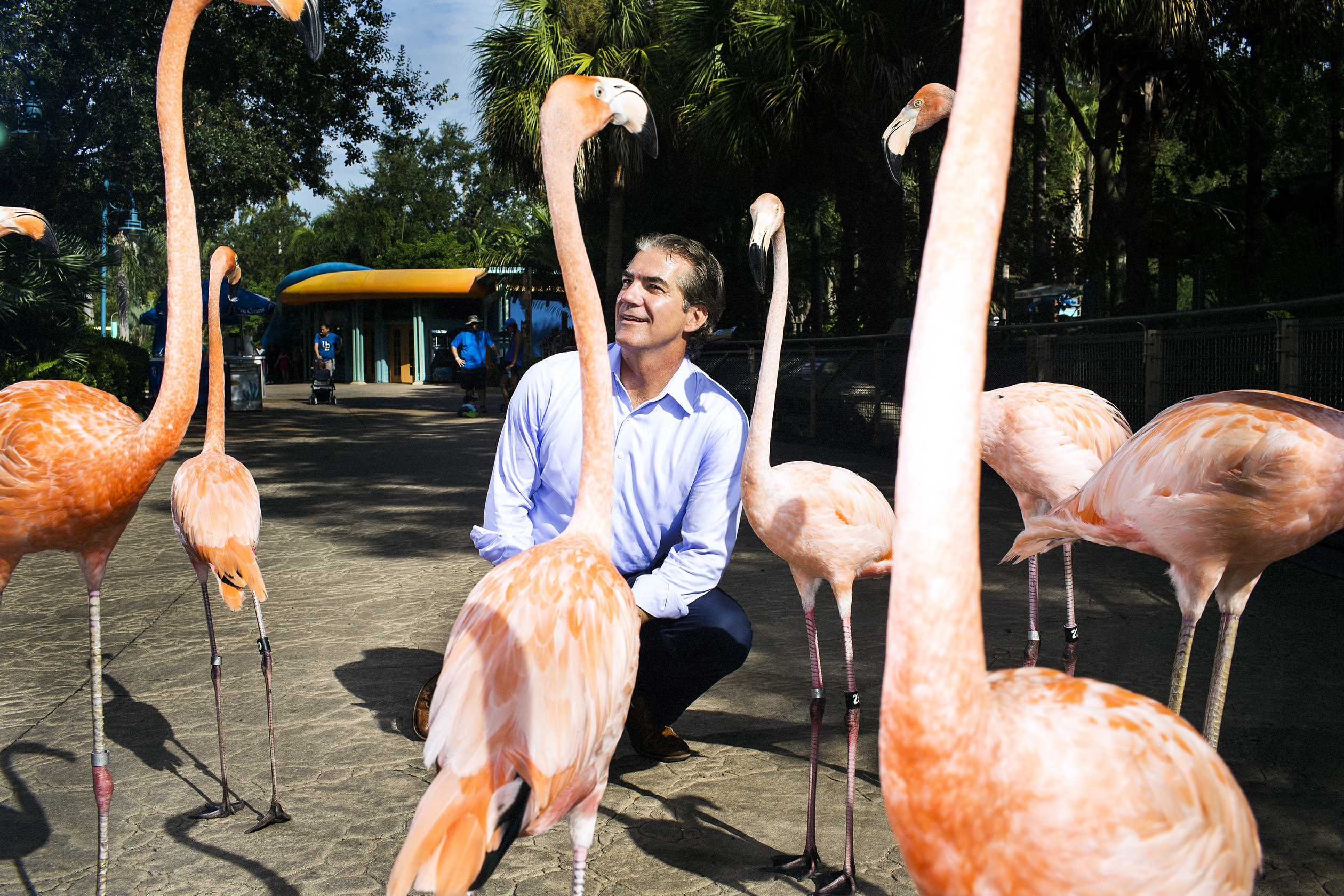 ORLANDO - AUG 8: Joel Manby, CEO, gets a birds eye view of flamingos who were walking through the park with staff at Sea World on Monday, August 8, 2016, in Orlando, Florida. (Photo by Landon Nordeman)
