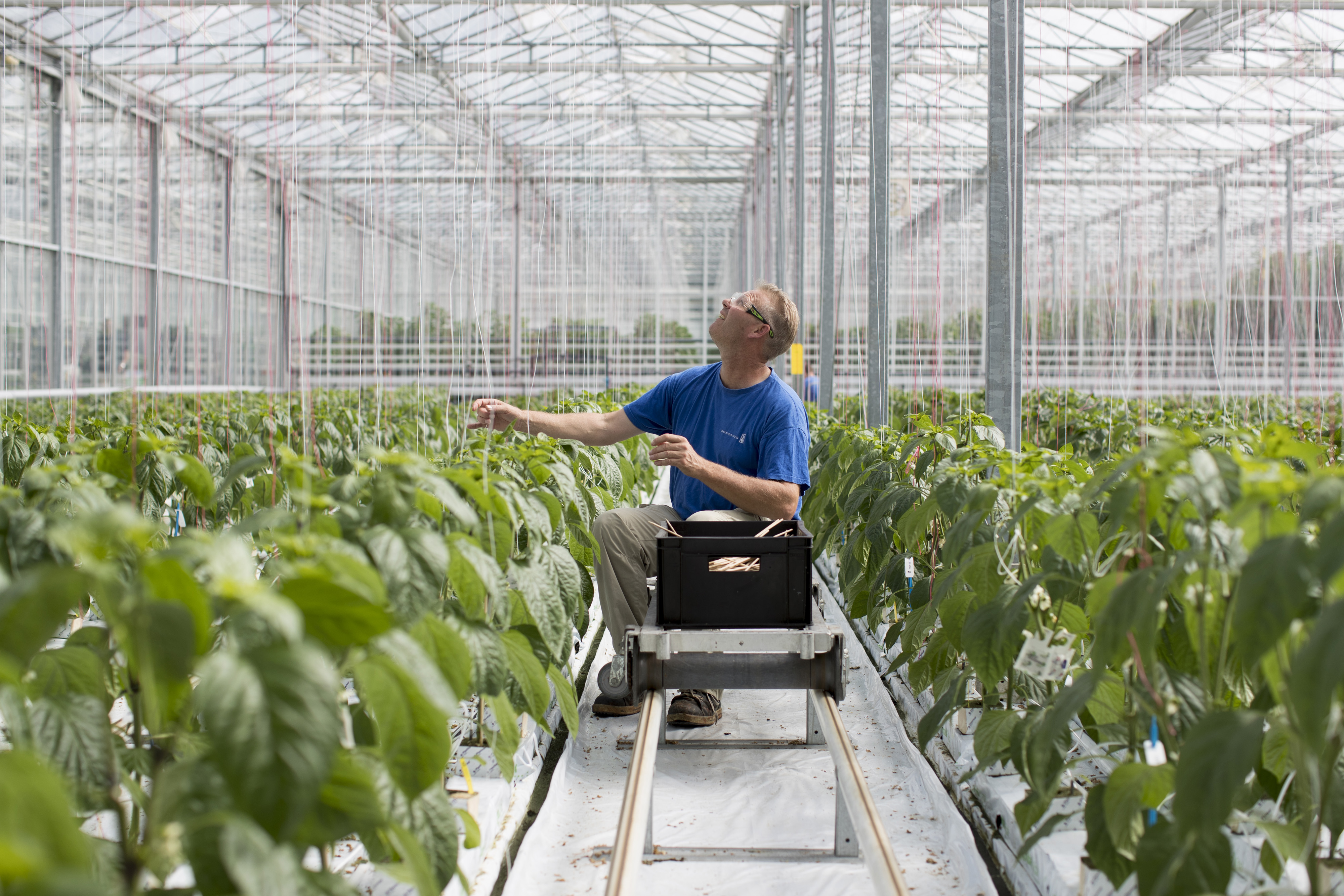 Fruit And Vegetable Seed Production Inside Monsanto Co. Seed Valley Greenhouses