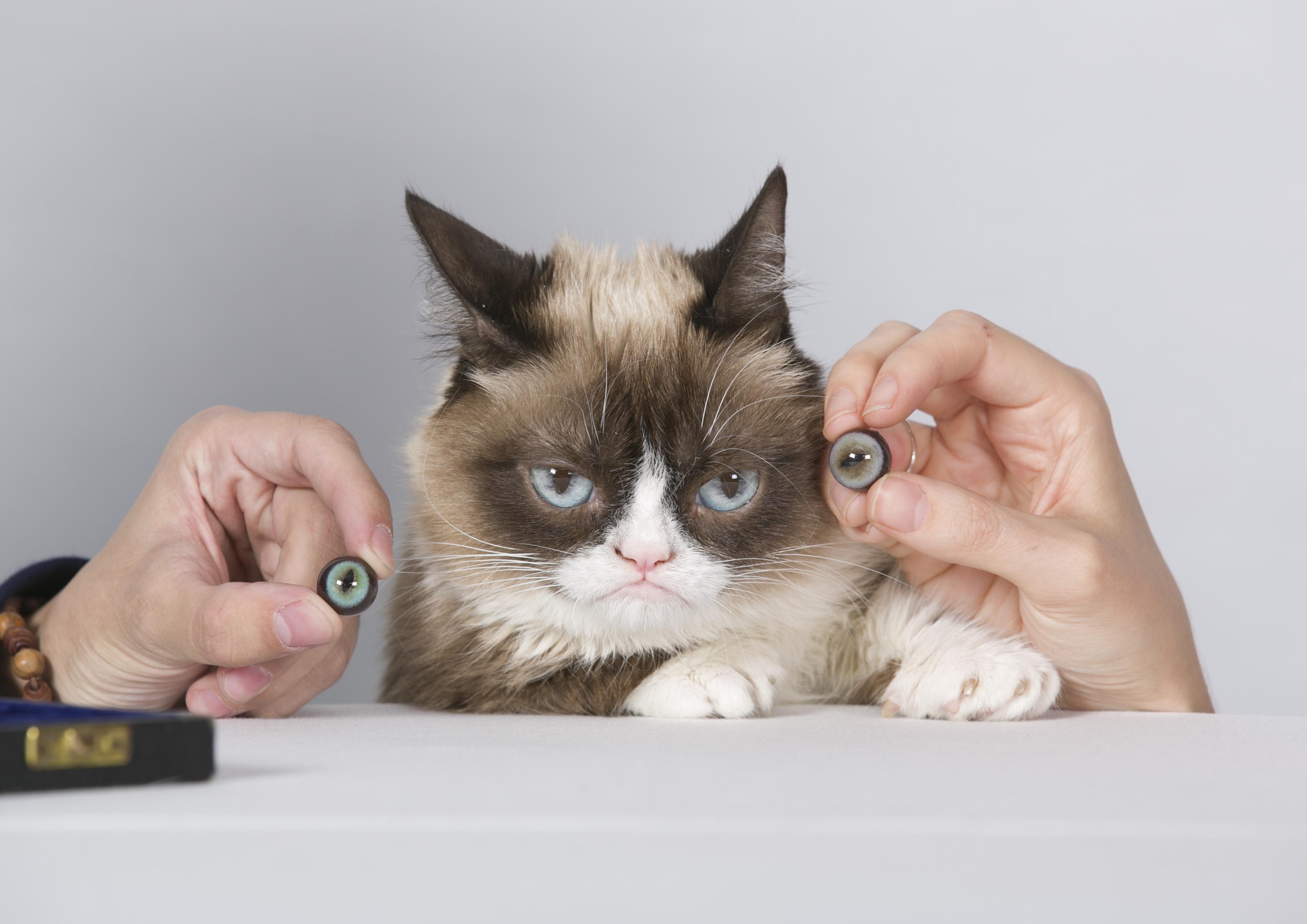 Grumpy Cat is the darling of meme-loving macro-makers everywhere.